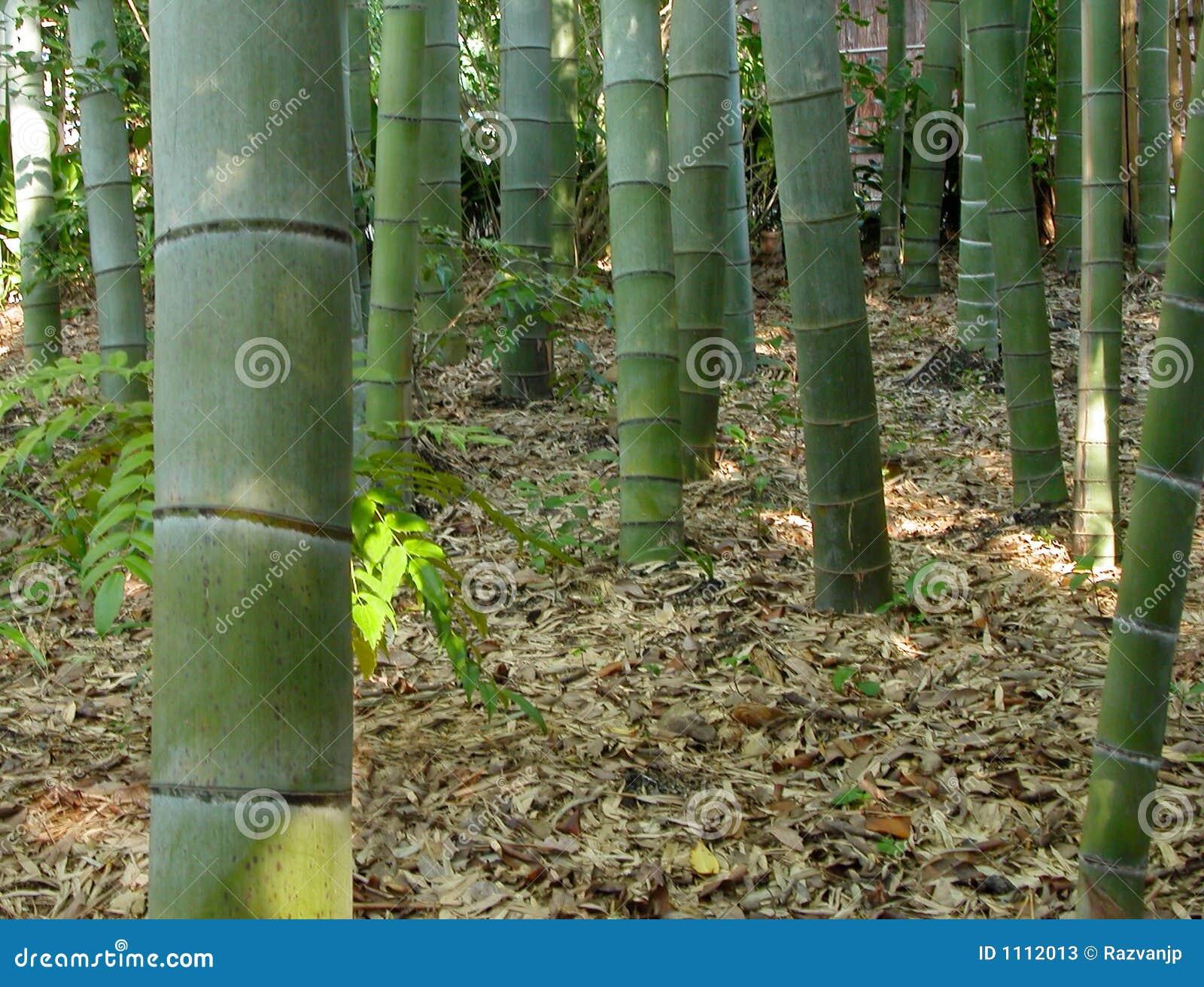 Bambudetaljskog