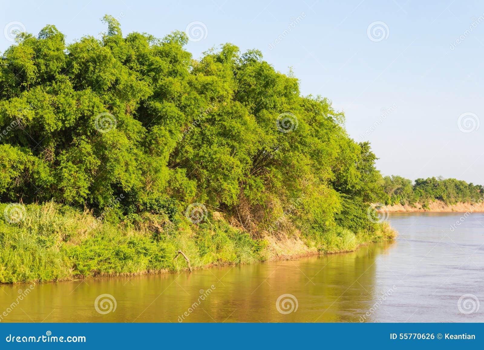 Bambuflodö