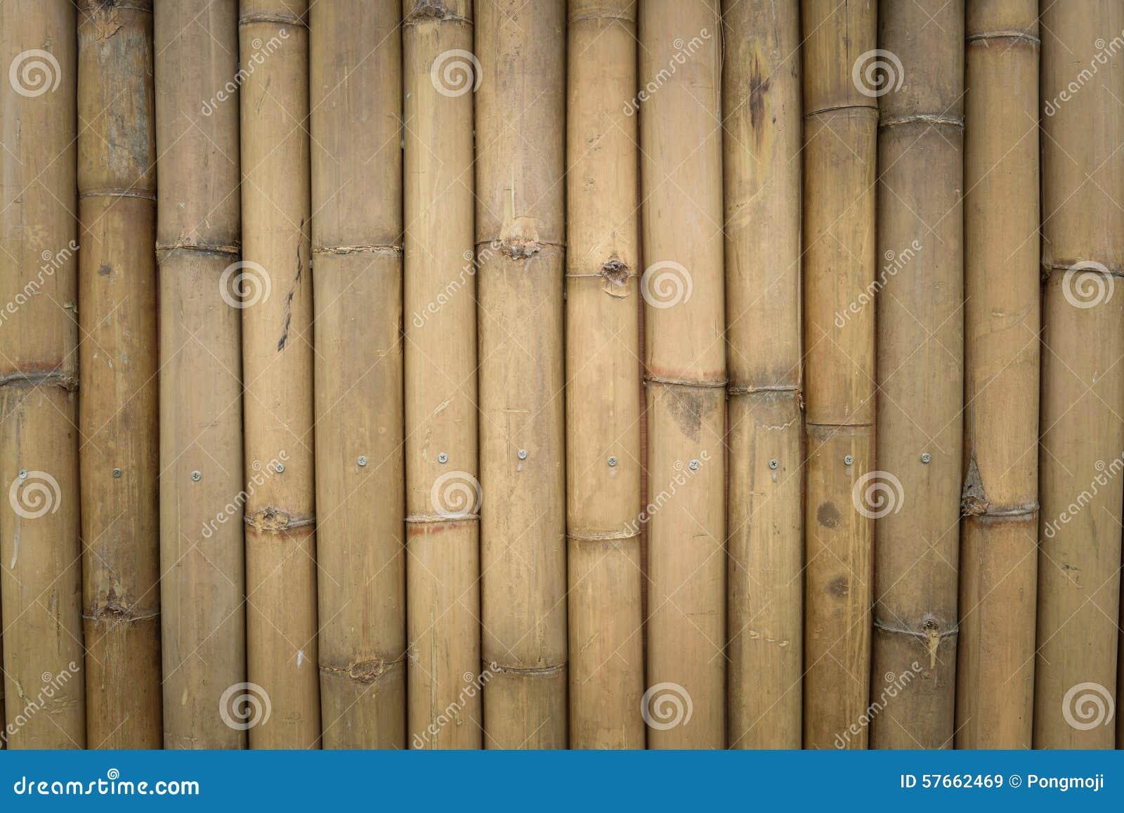Bambus ścienna tekstura