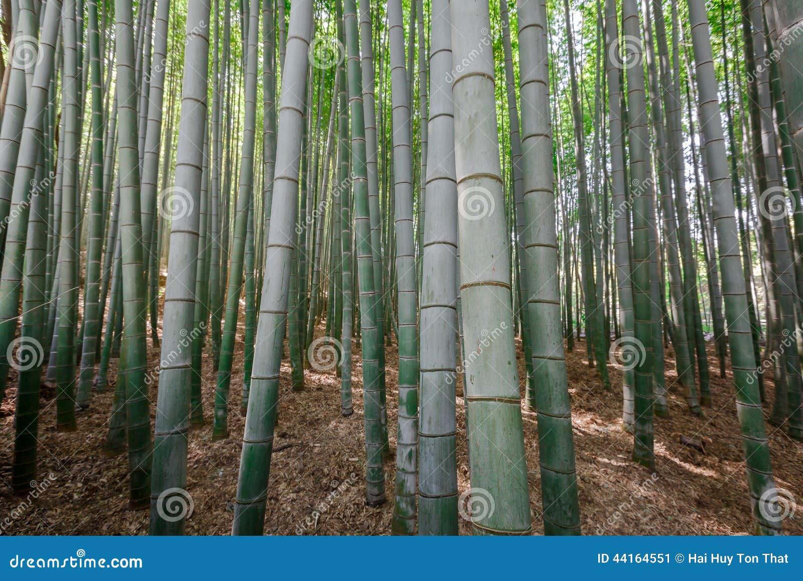 Bambus forrest