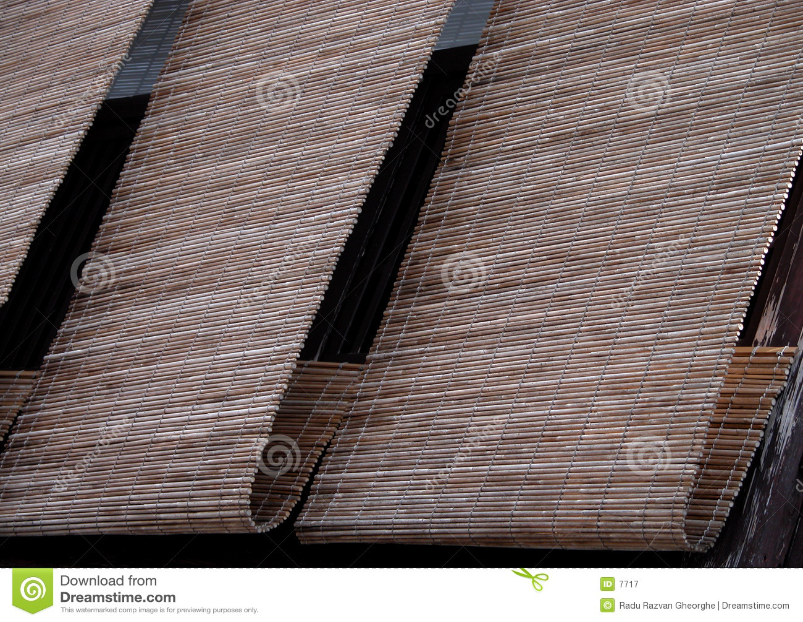 Bambus oślepia gion