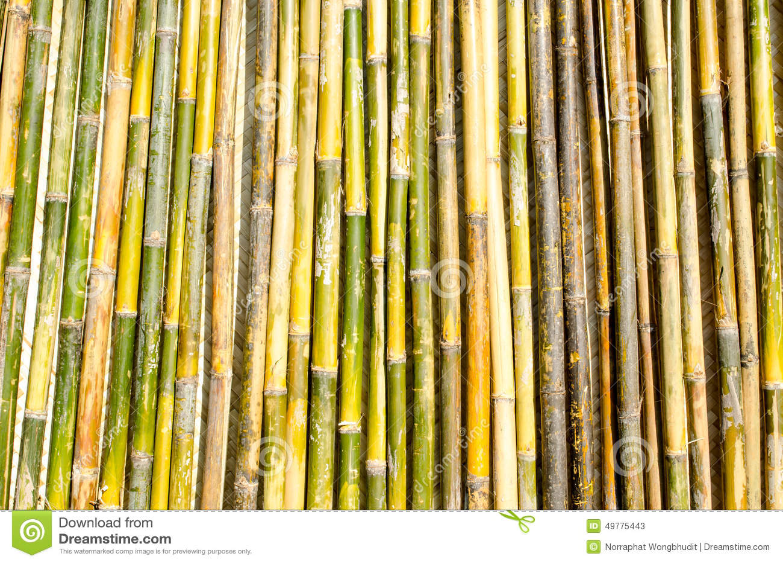 bambus pole zaun stockbild bild von betrieb zweig rand 49775443. Black Bedroom Furniture Sets. Home Design Ideas