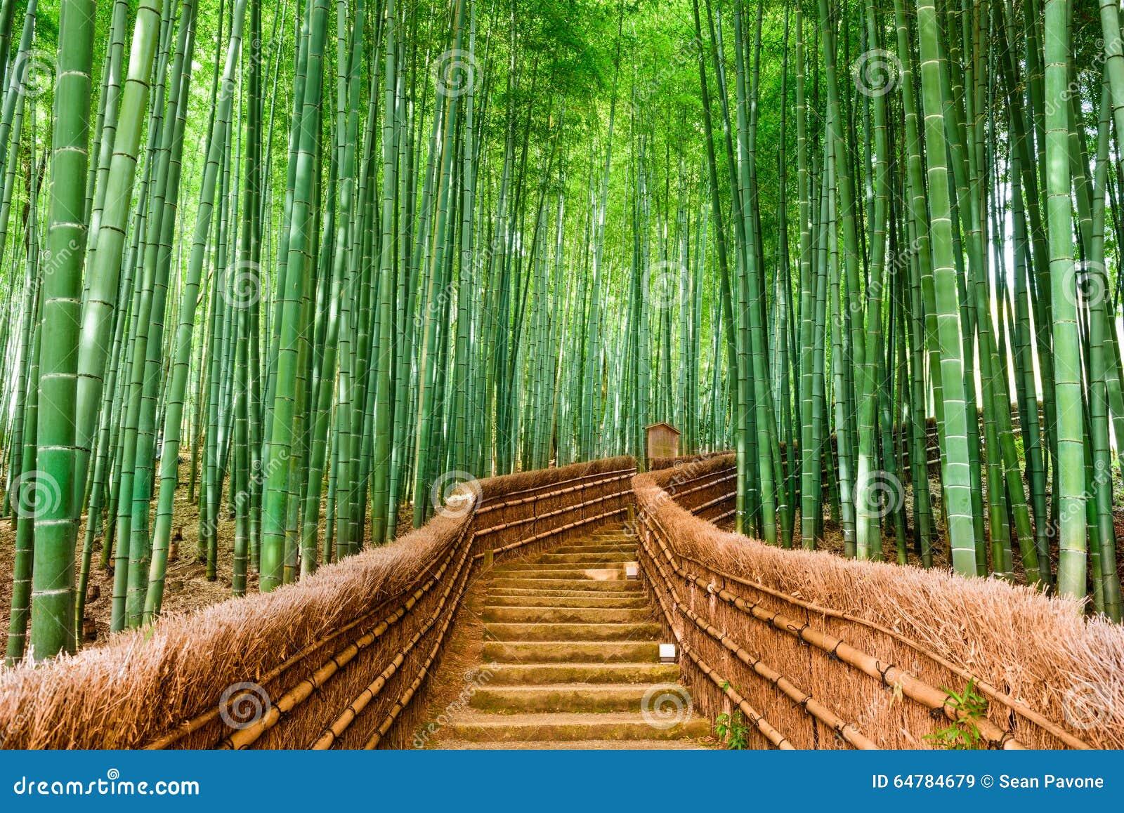 Bambus Wald Kyotos Japan Stockbild Bild Von Schon Szenisch 64784679