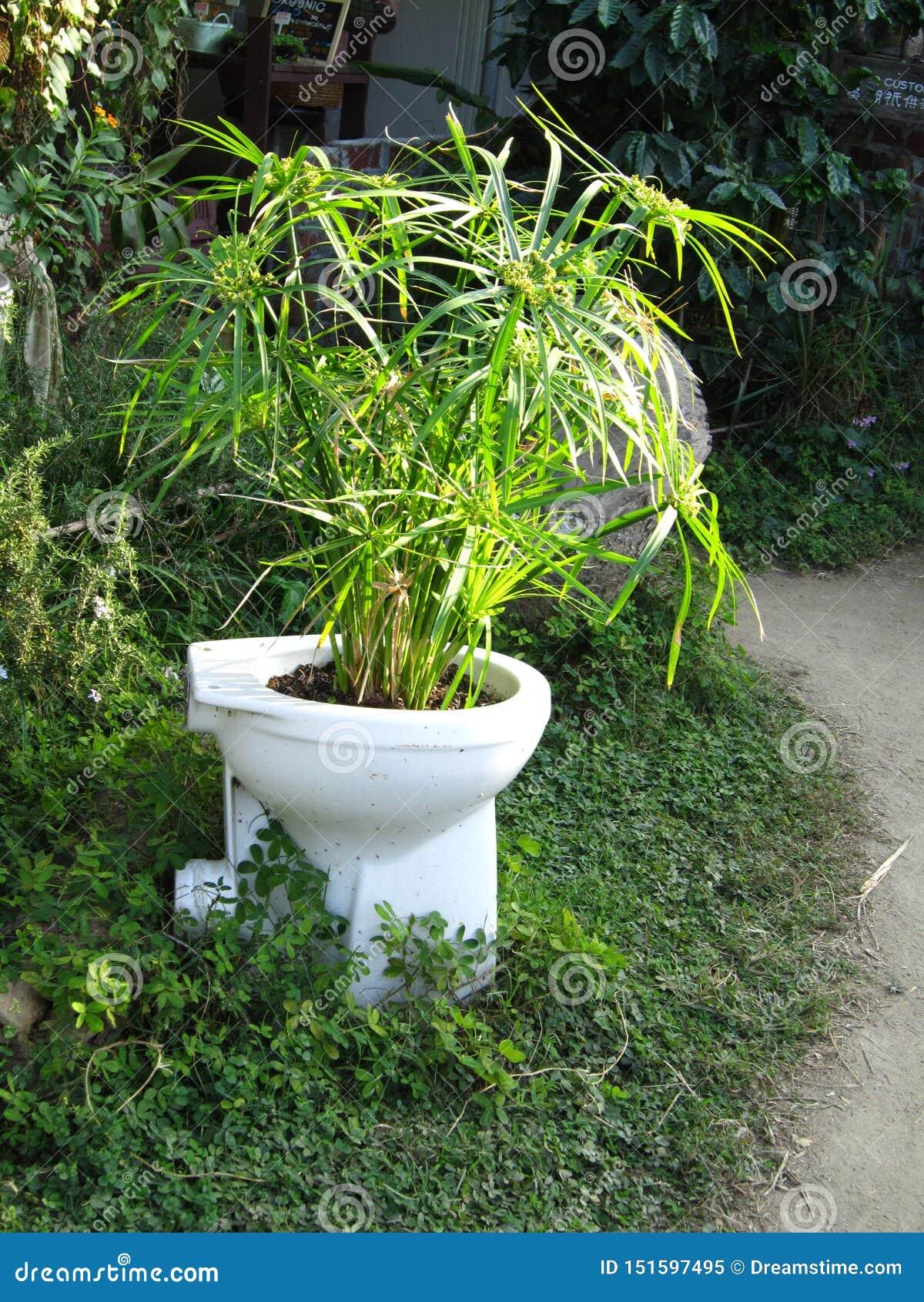 Bambusowa dorośnięcie formy toaleta przy Lamma wyspą HK