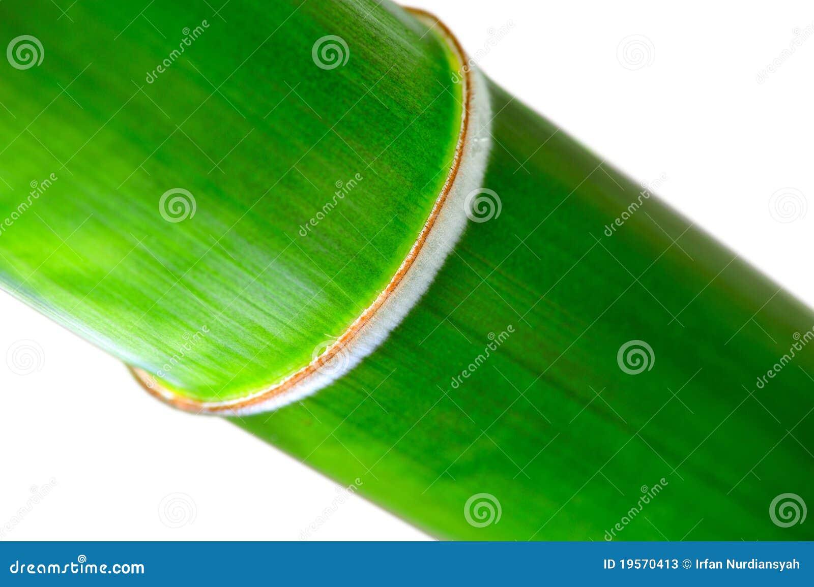 Bambusowy guzek