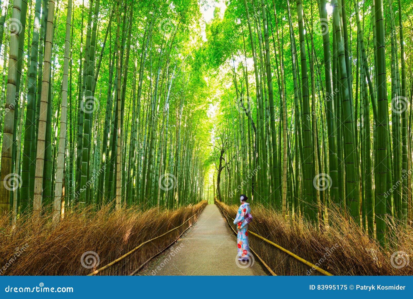 Bambusowy las Arashiyama blisko Kyoto, Japonia