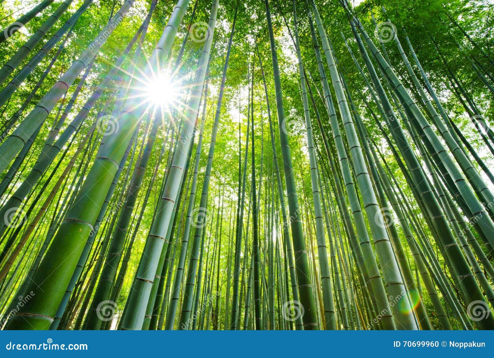 Bambuswald Arashiyama Kyoto Japan Stockfoto Bild Von