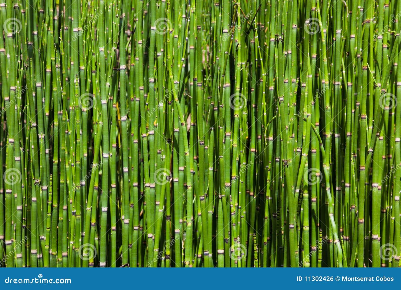 Bambuswaldung