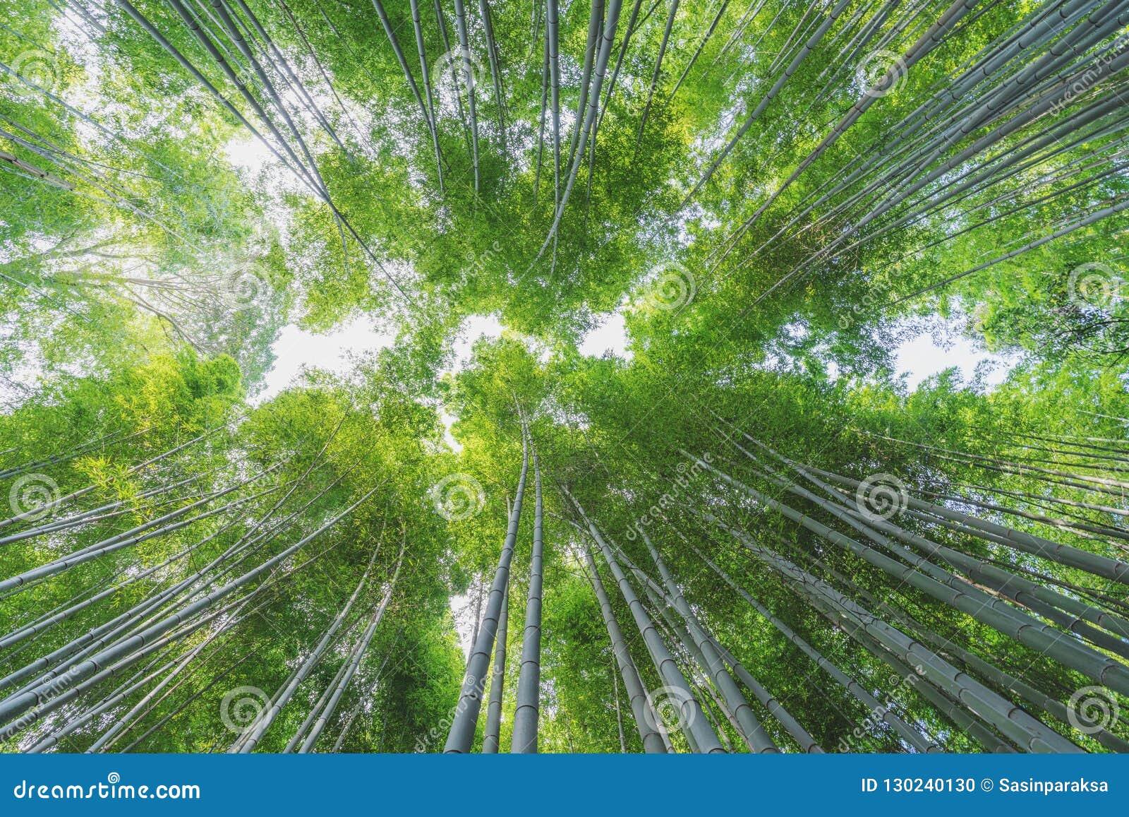 Bambuswaldung An Bambuswald Arashiyama In Kyoto Japan Stockfoto