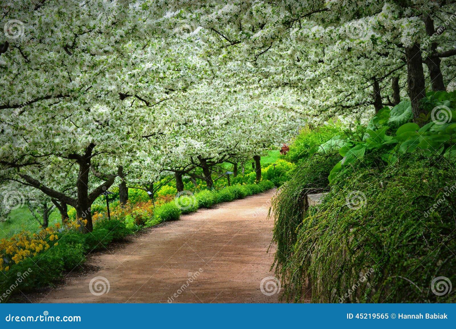 Bana för Apple fruktträdgård