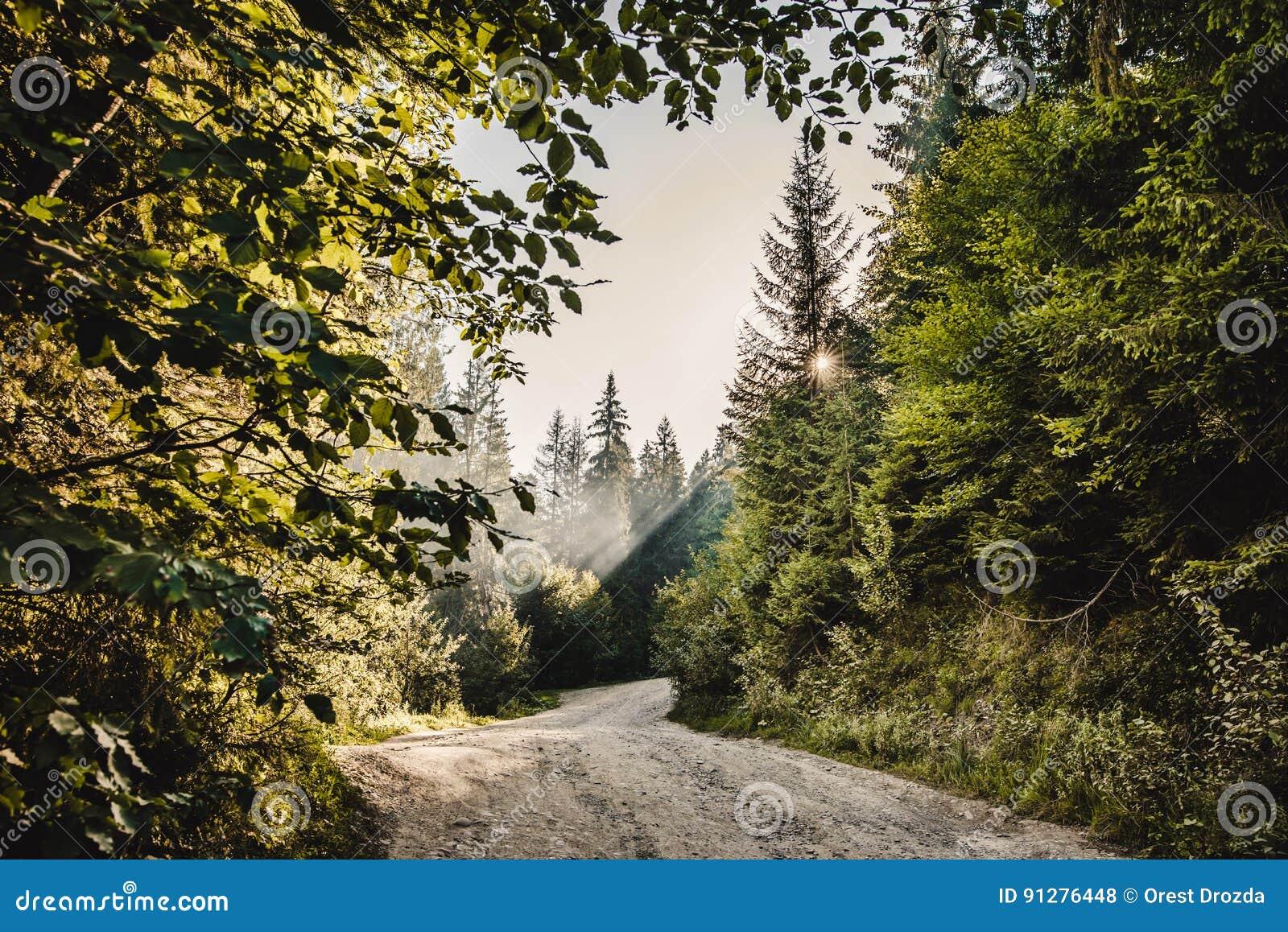Bana i en skog