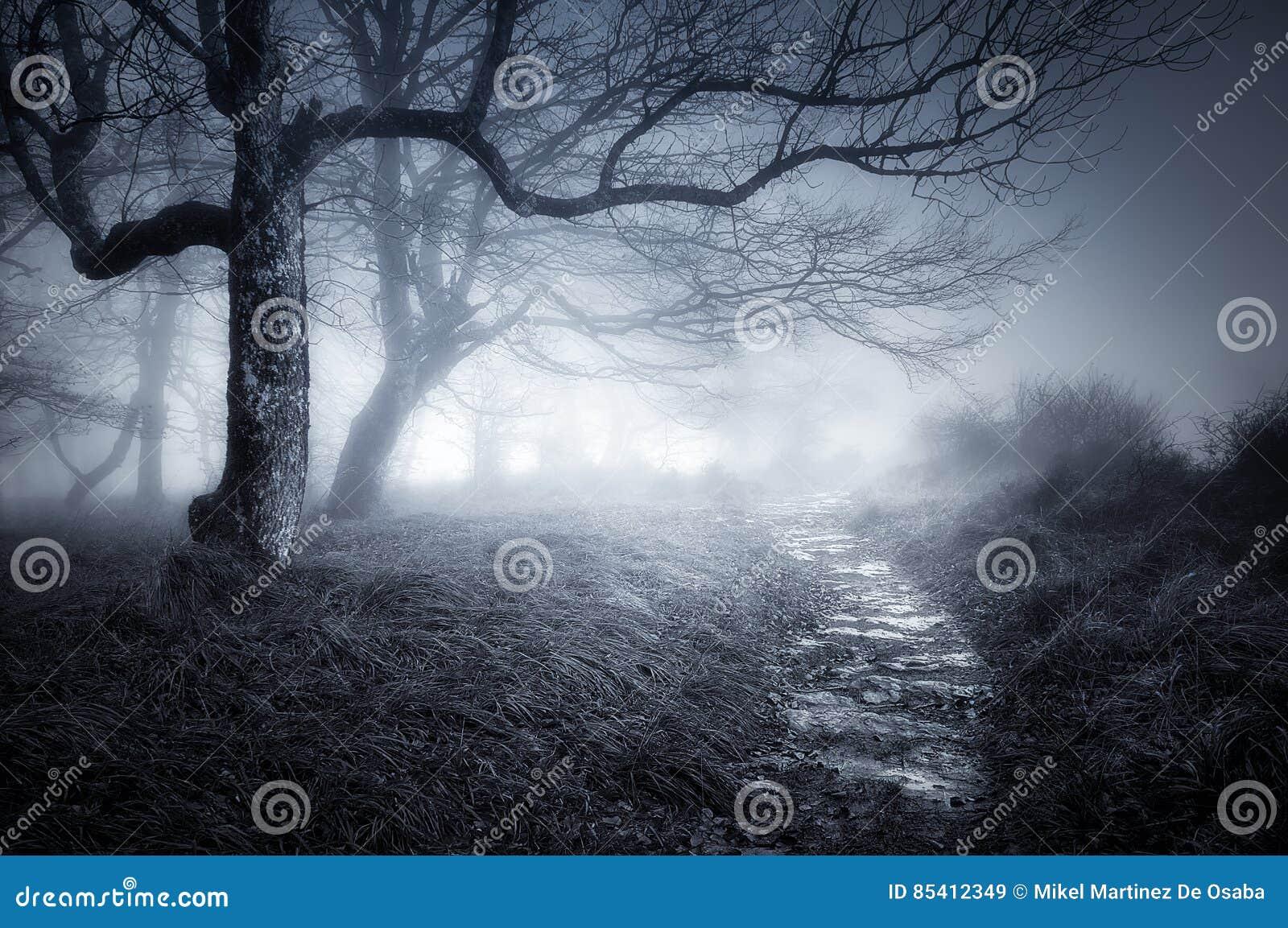 Bana i mörk och läskig skog