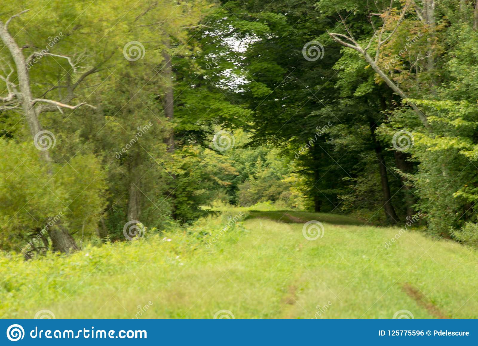 Bana i skogen nära den Howard Eaton behållaren