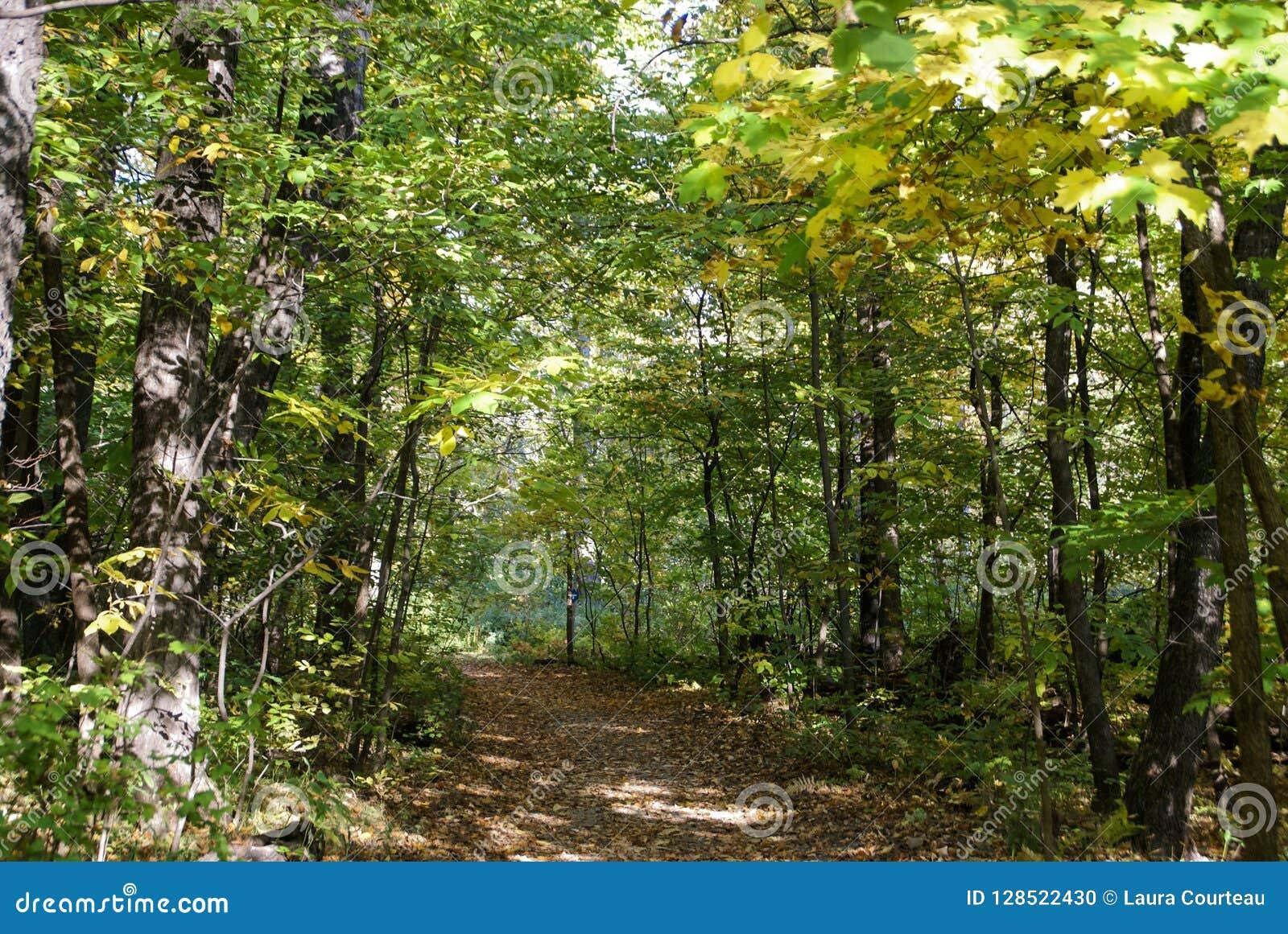 Bana som går till och med gräsplansidorna i en skog i sydliga Minnesota