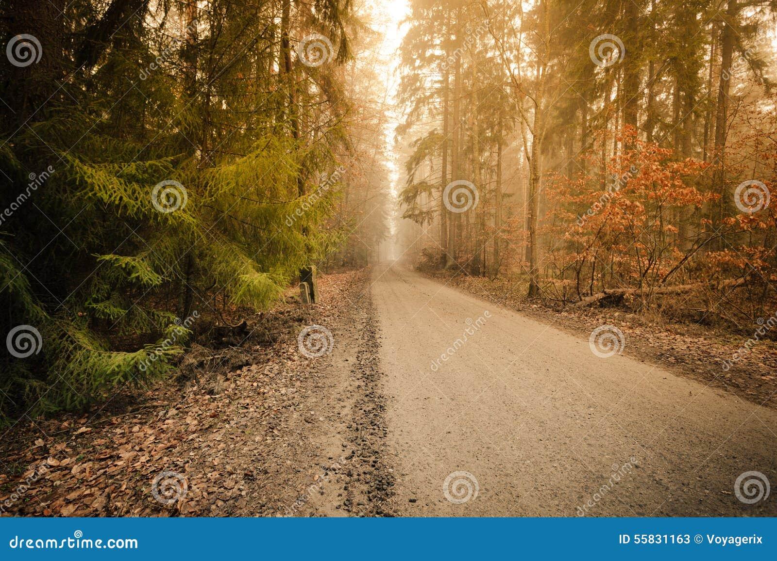 Bana till och med den dimmiga höstskogen