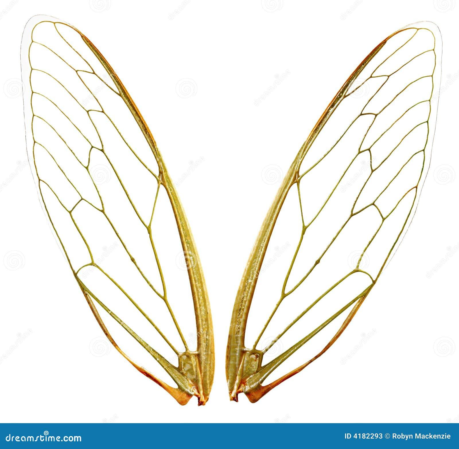 Banan wings wth