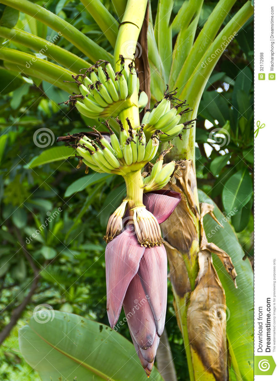 how to use banana blossom