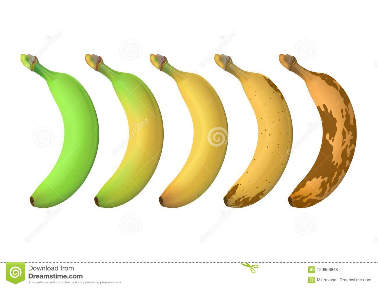 Banana fruit ripeness levels from green underripe to brown rotten. Vector set isolated on white background