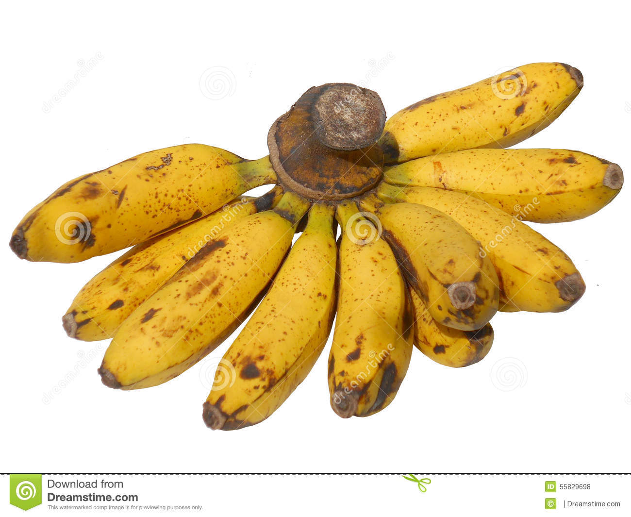 A banana is a fruit or berry. Little known facts about bananas 67