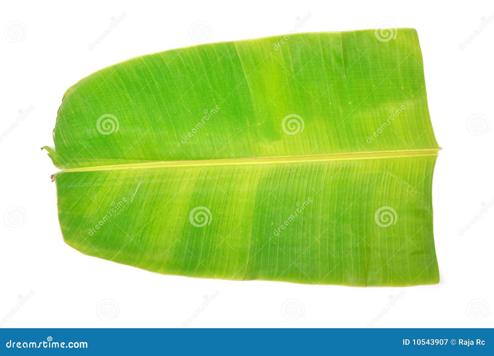 Banana Leaf Stock Image Of Beautiful Pattern