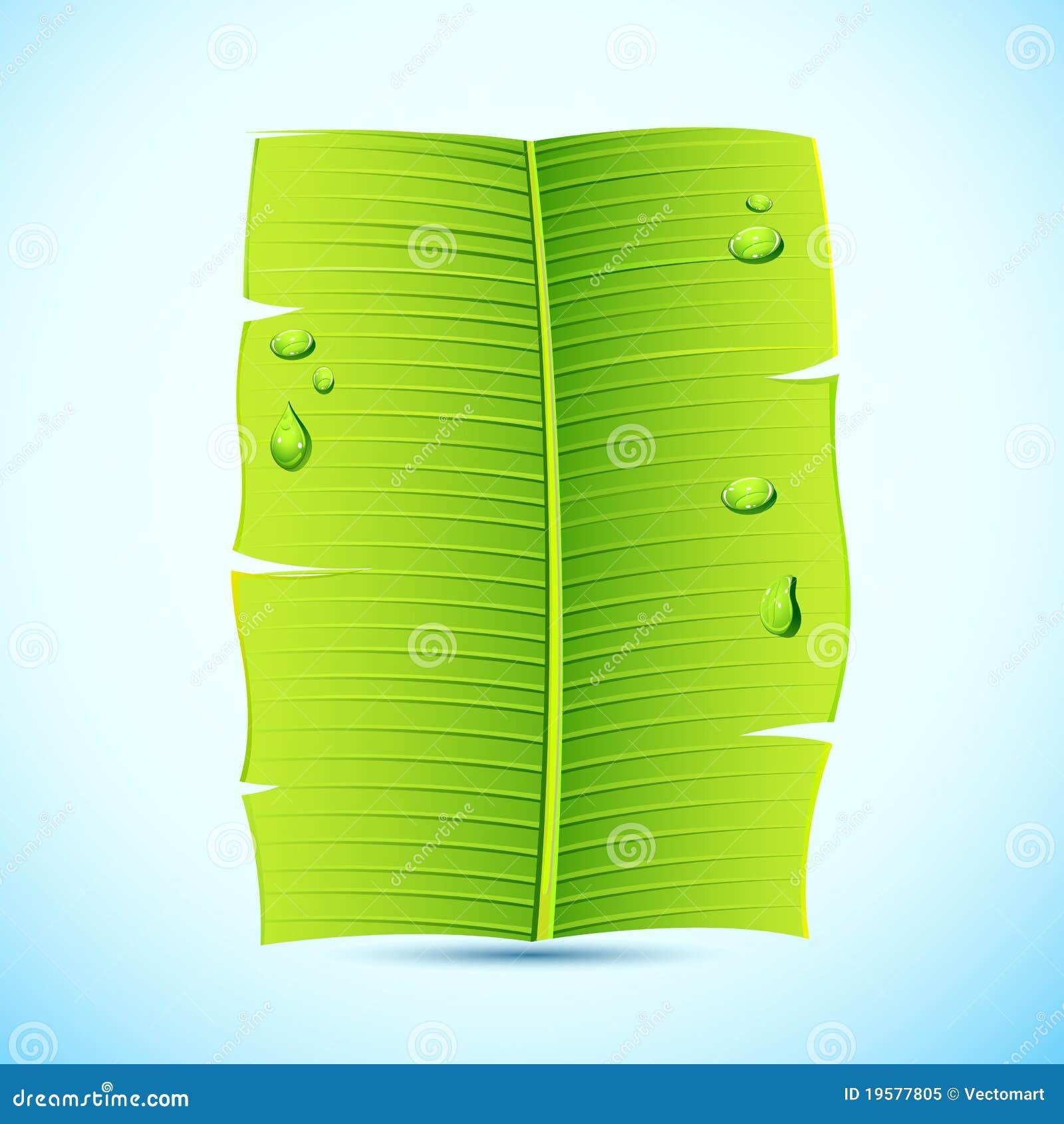 Banana Leaf Invitation Letter Royalty Free Stock Photo ...