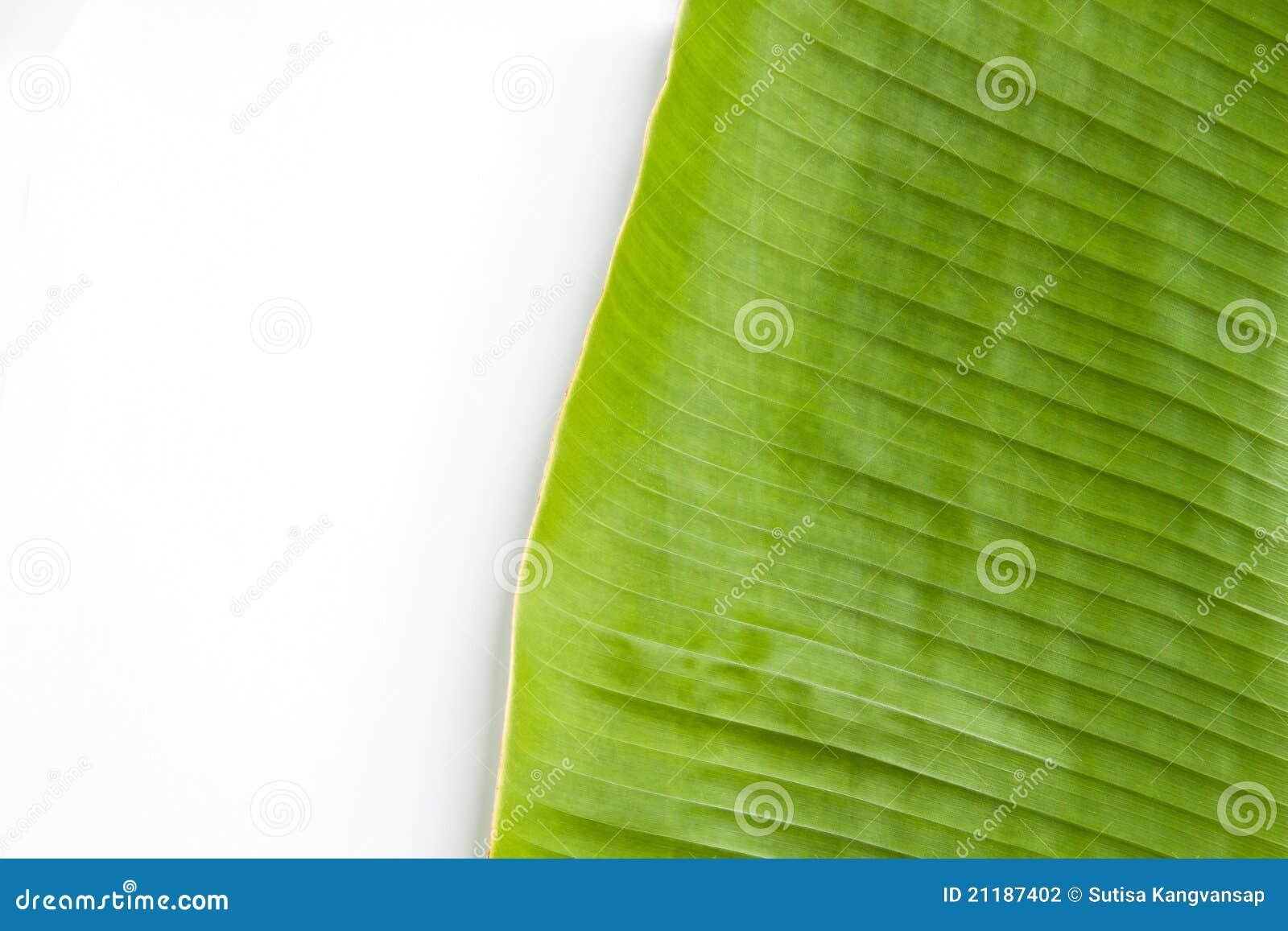 Banana leaf in white background