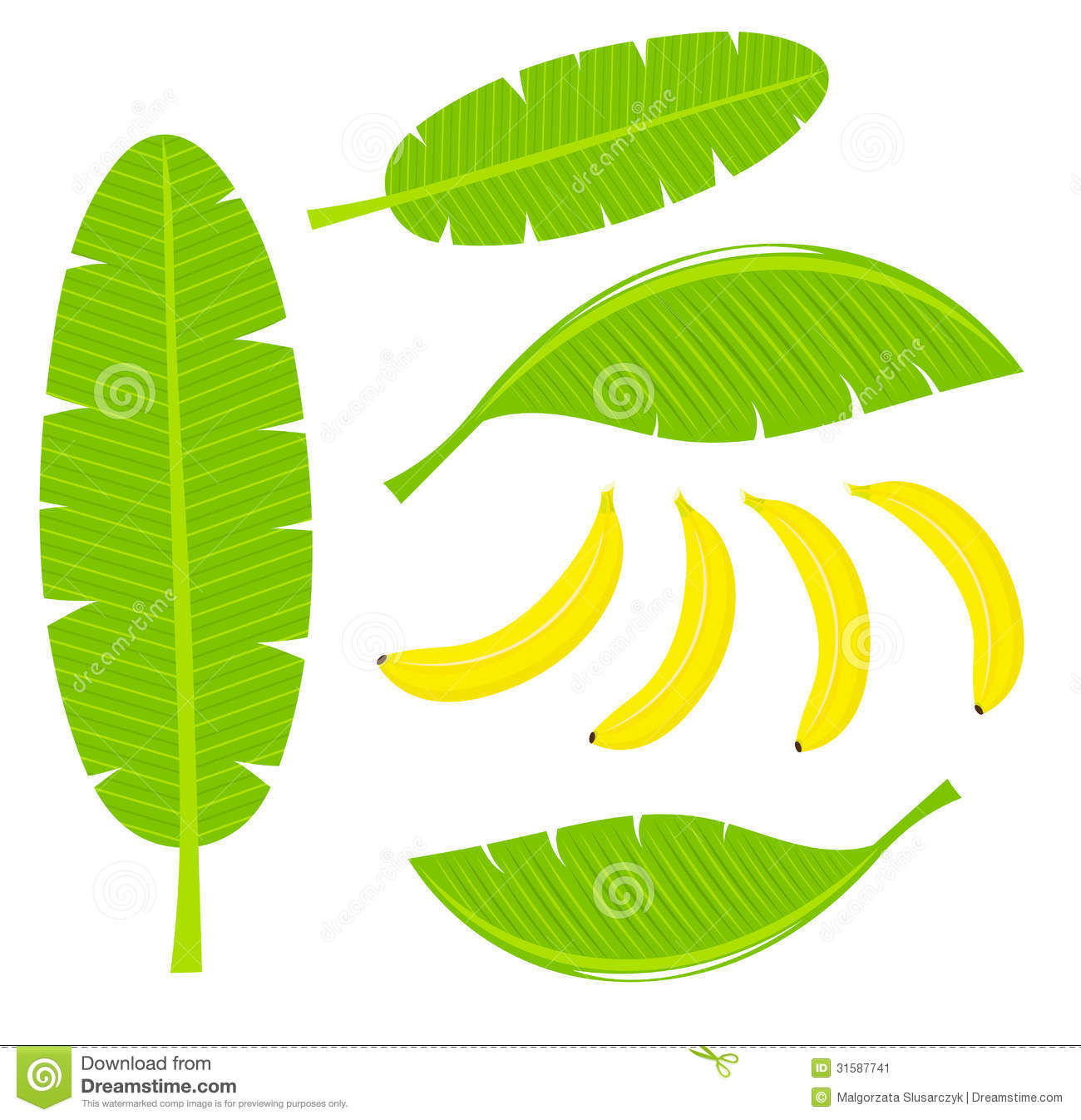 Banana leaves and fruits. Vector illustration.