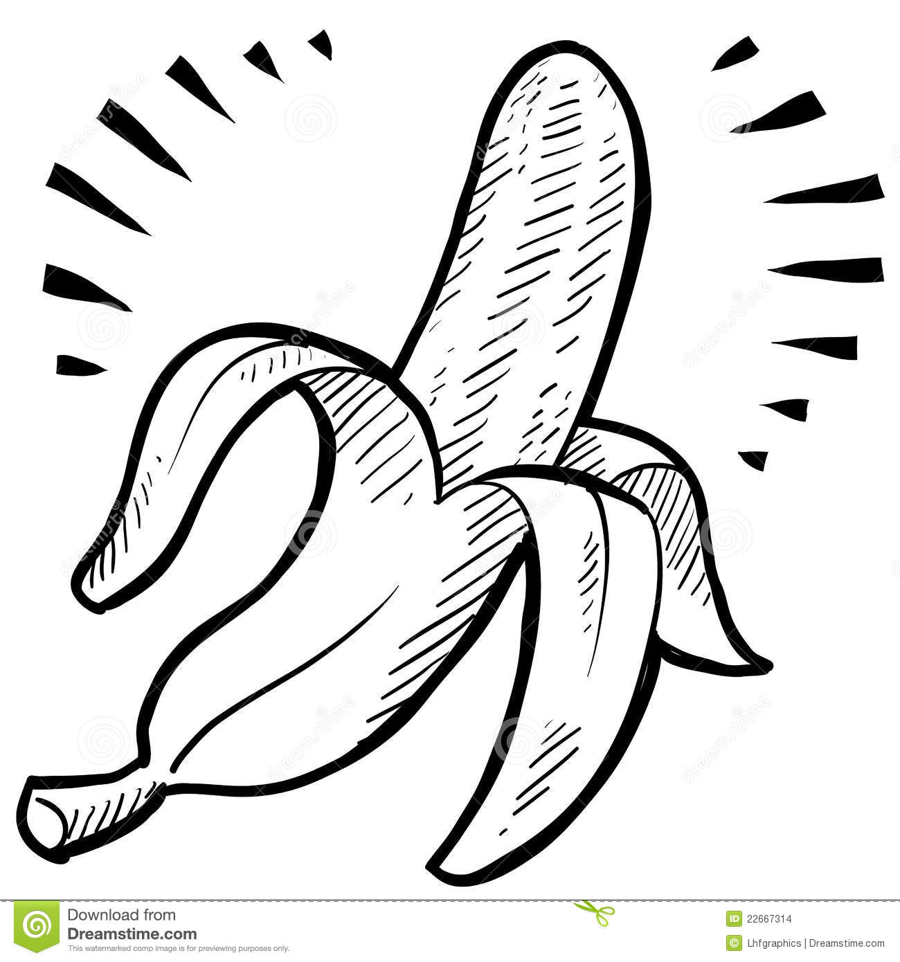 Banana Sketch Stock Images Image 22667314