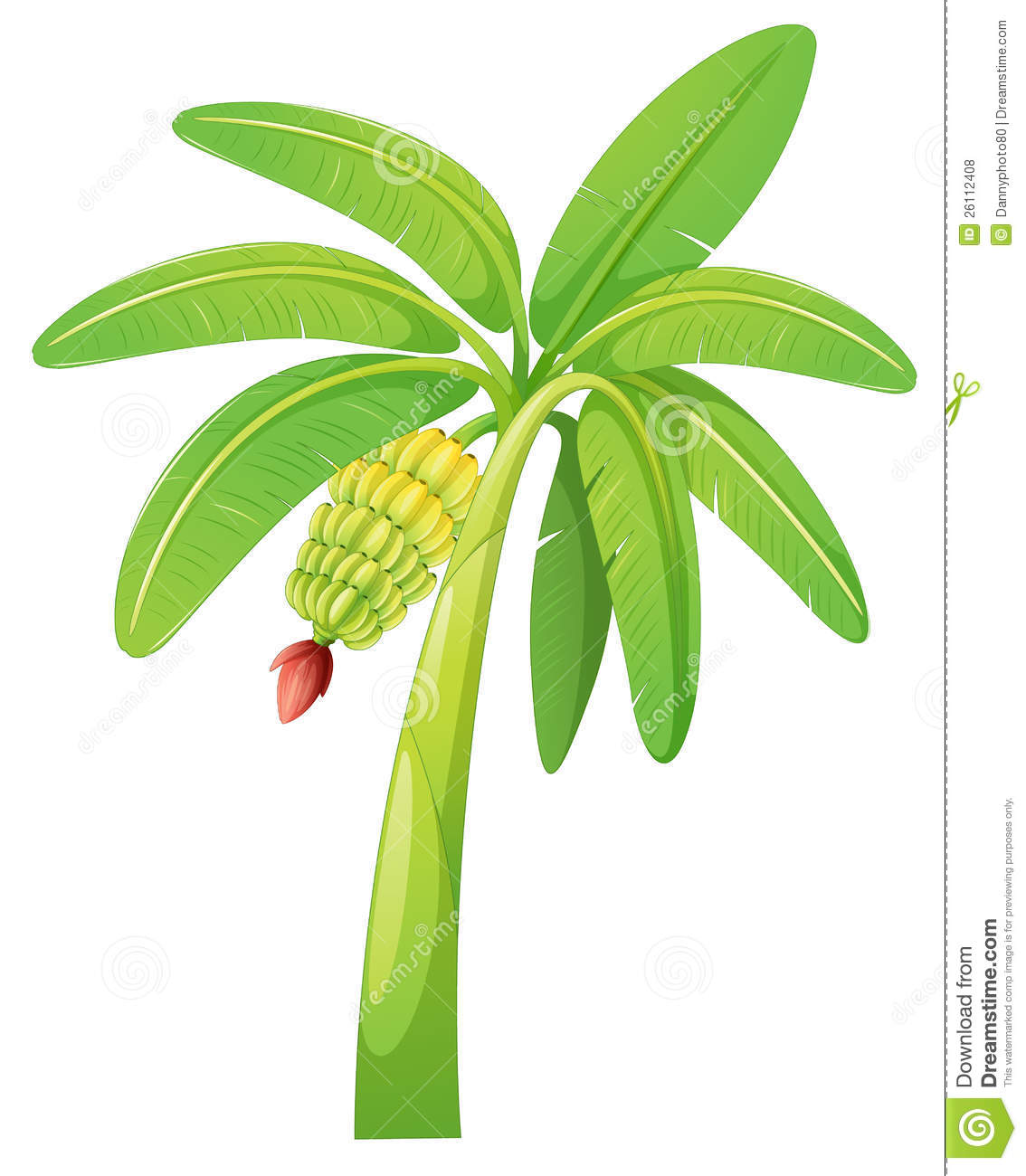 Banana Tree Royalty Free Stock Photos - Image: 26112408