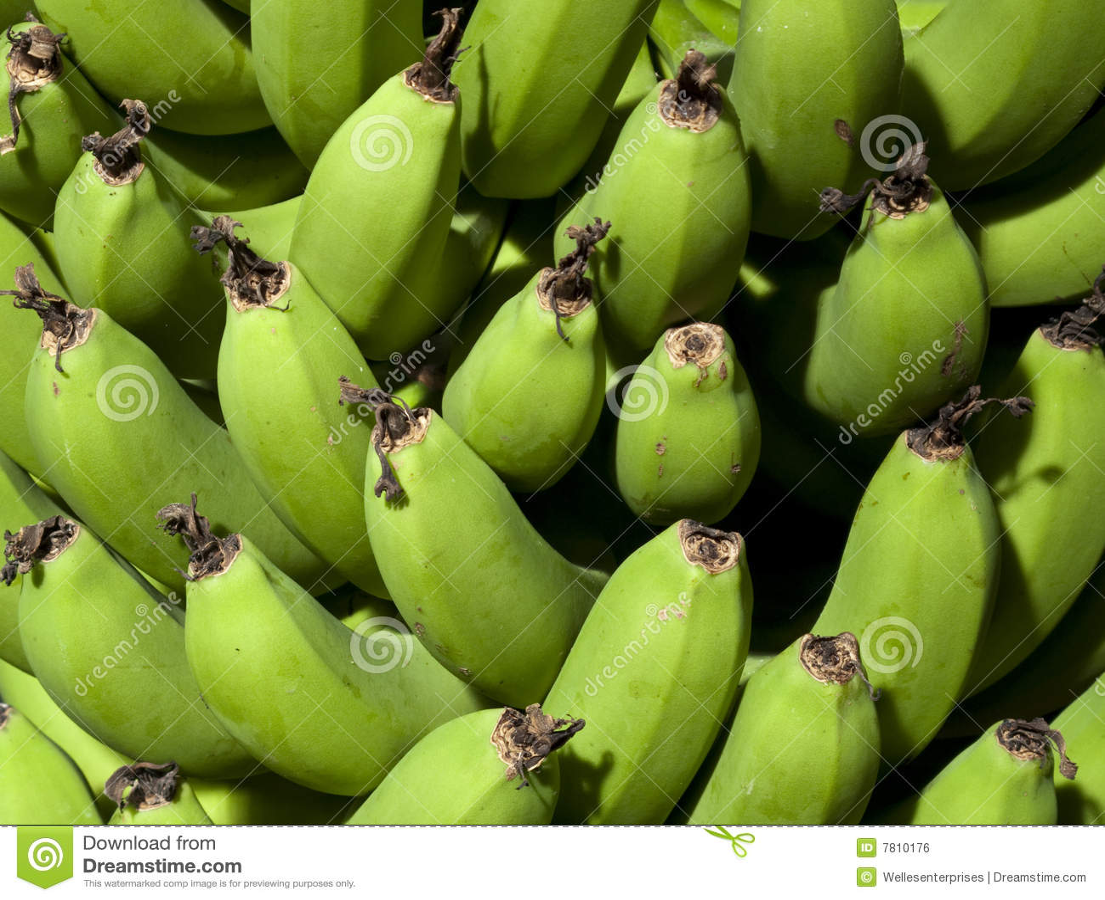 Profitable Banana Farming; Information & Guide for Beginners