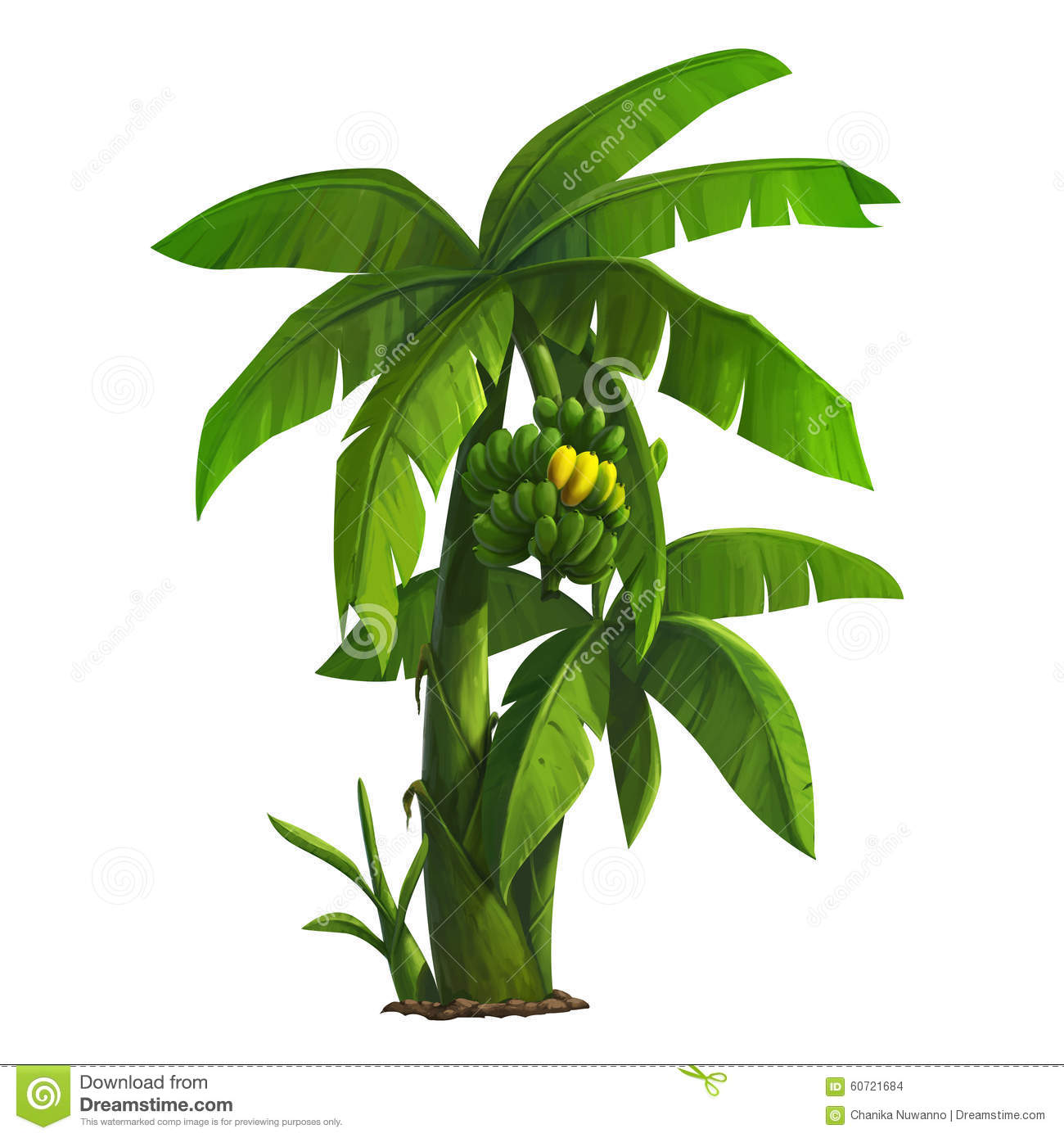Banana tree stock illustration. Illustration of tropical ...