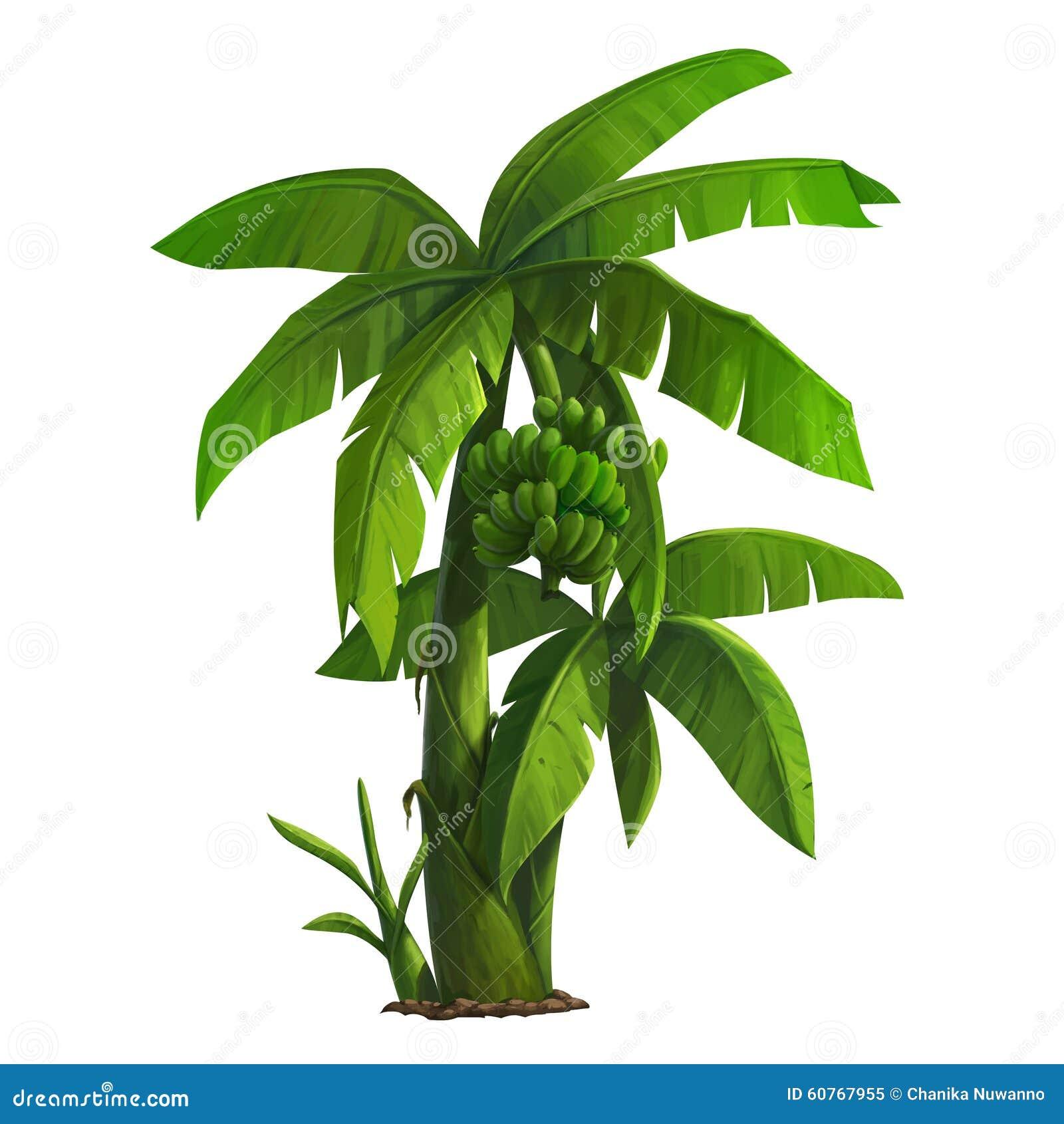 Banana Tree Stock Illustration Illustration Of Seedling 60767955