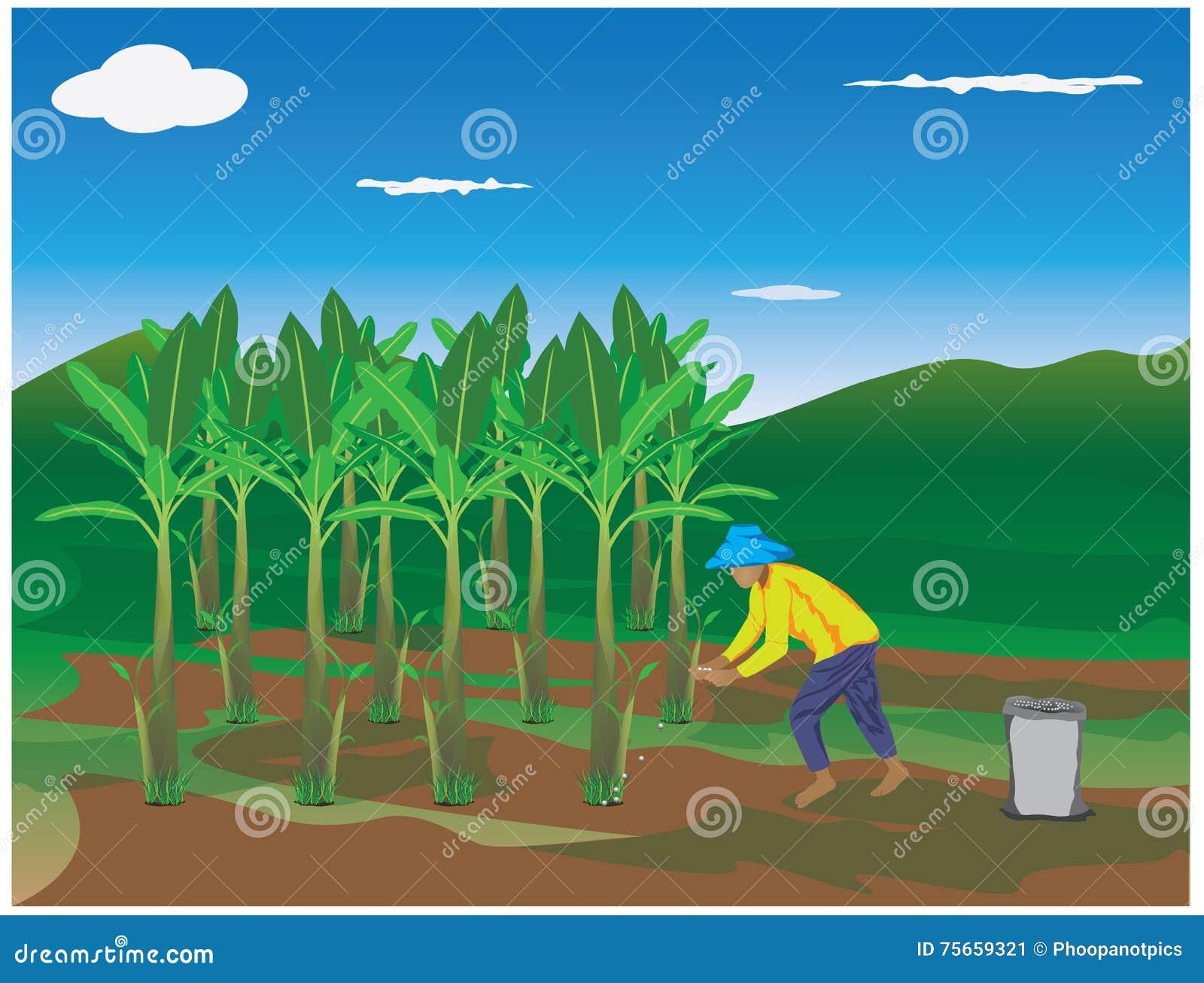 bananier d 39 engrais d 39 agronome illustration stock illustration du fermier mine 75659321. Black Bedroom Furniture Sets. Home Design Ideas