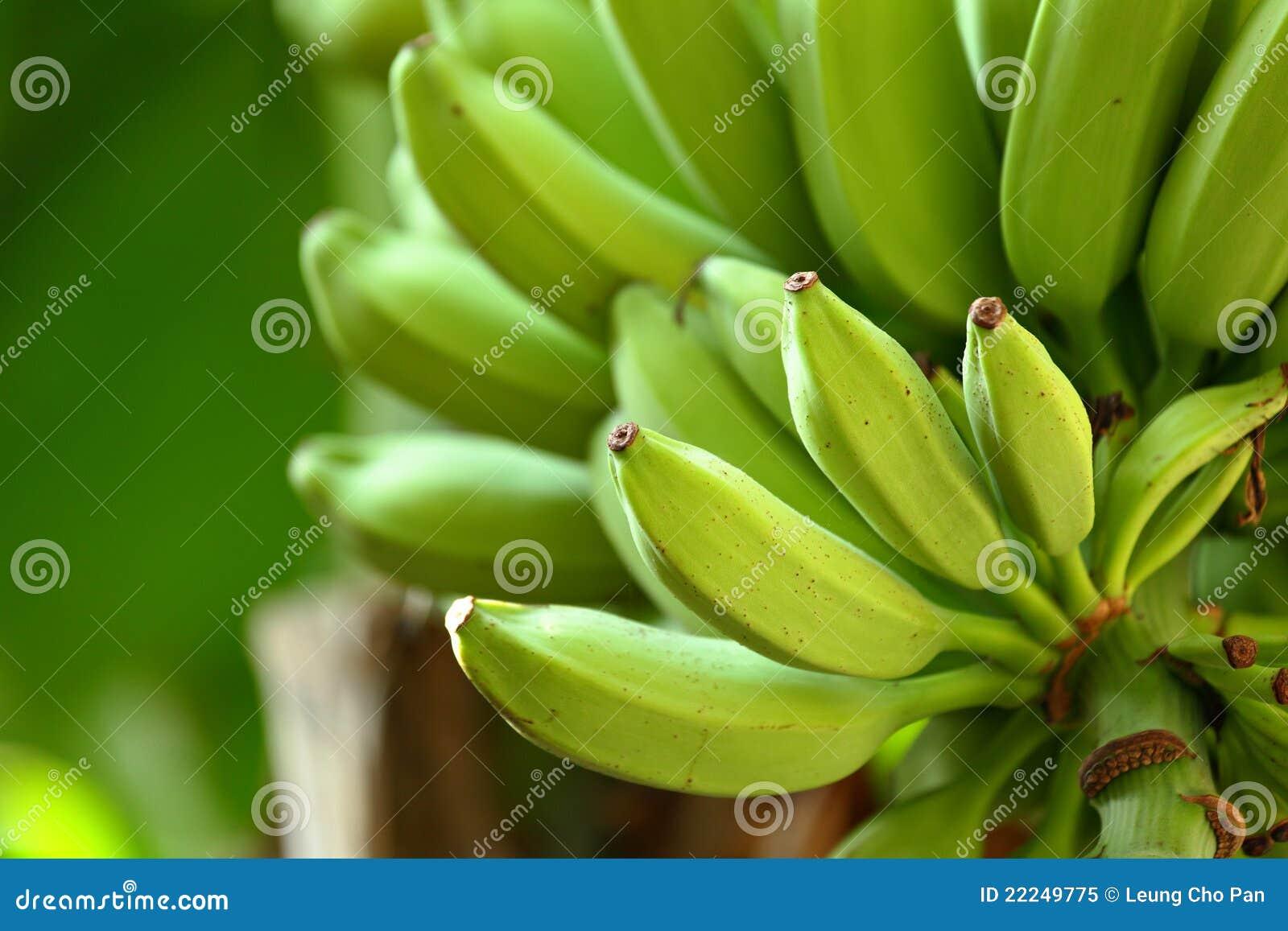 Bananowy drzewo