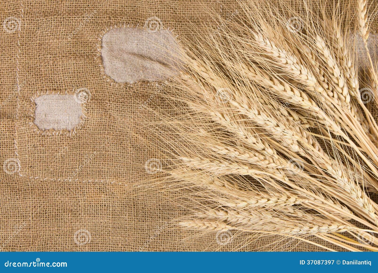 Download Banatka odizolowywająca obraz stock. Obraz złożonej z farm - 37087397