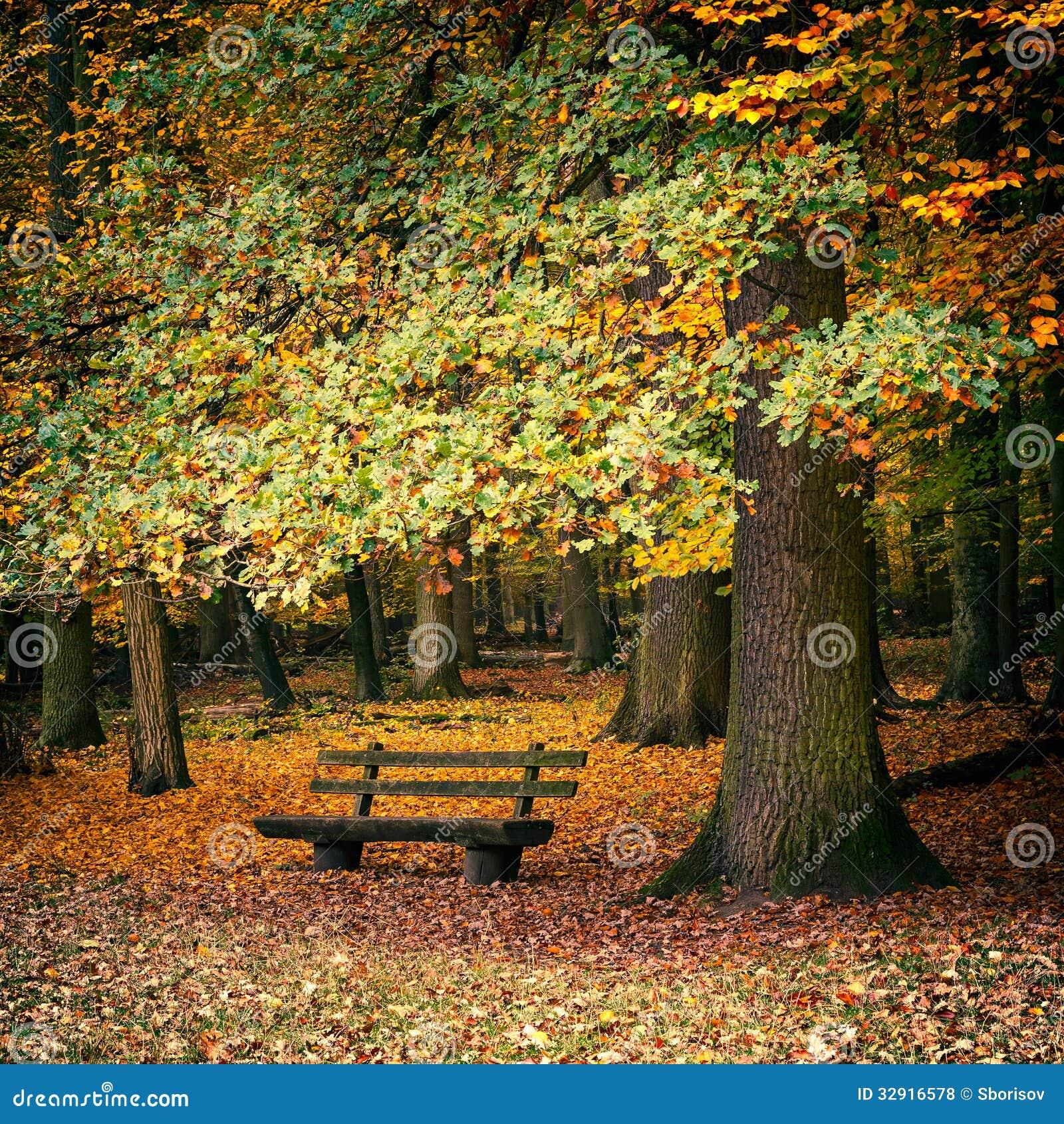 Banc dans la for t d 39 automne photo stock image 32916578 for Dans la foret