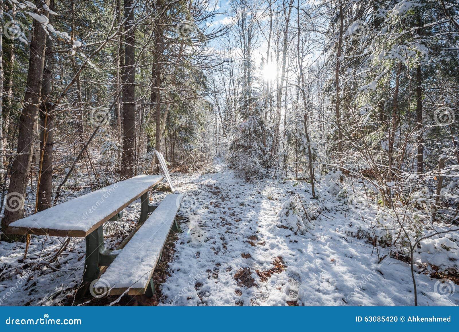 Download Banc dans les bois photo stock. Image du stationnement - 63085420