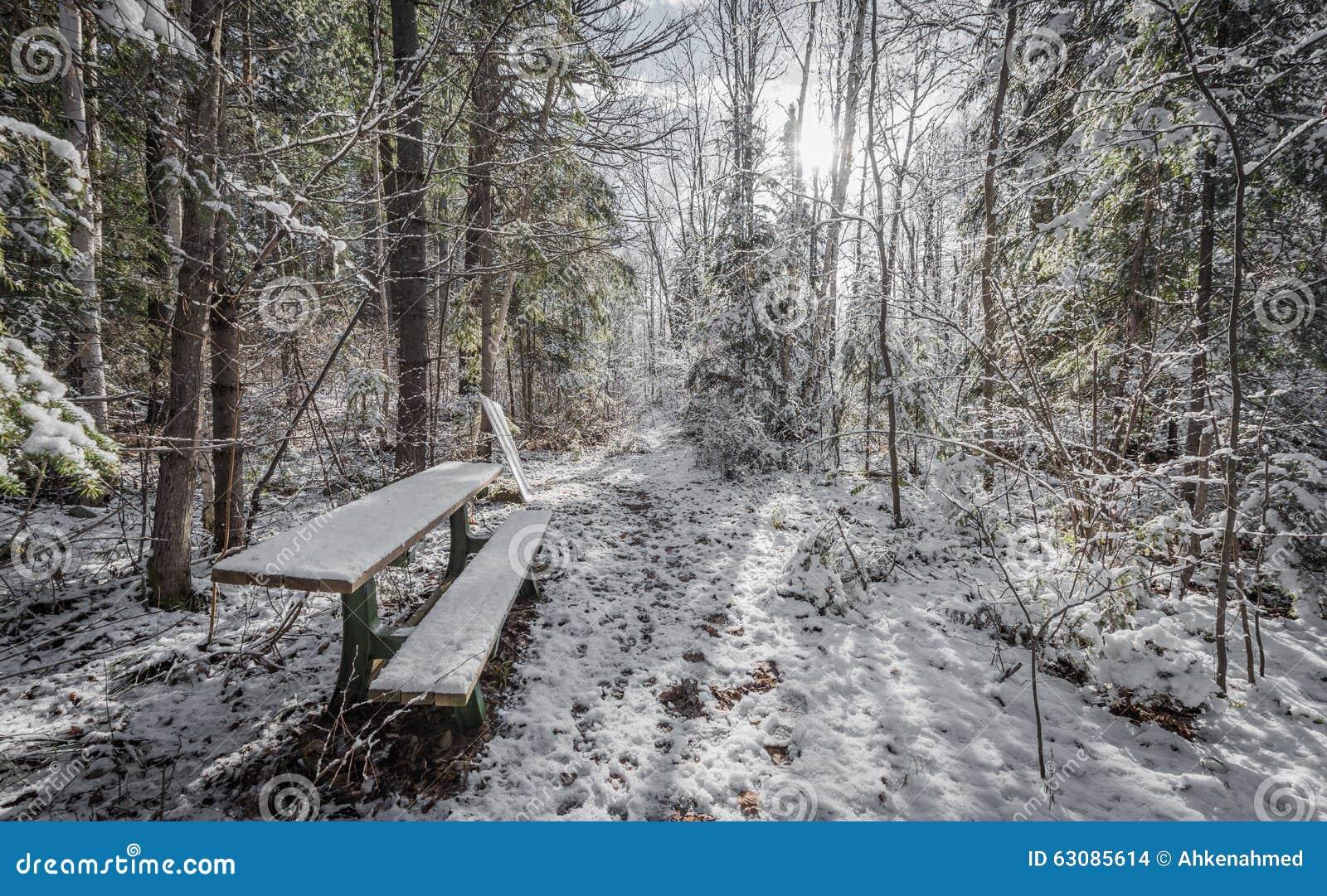 Download Banc dans les bois photo stock. Image du buissons, neige - 63085614