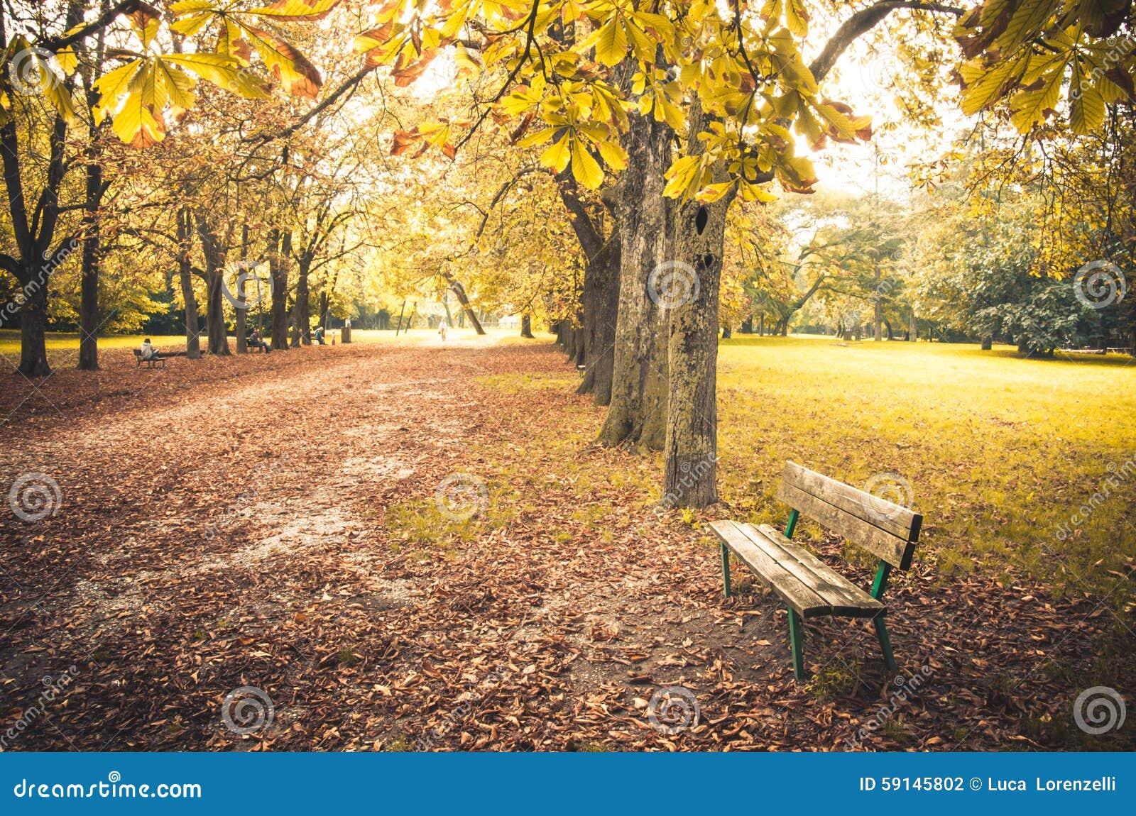 banc de parc de saison d 39 automne en parc public photo stock image du couleurs arbre 59145802. Black Bedroom Furniture Sets. Home Design Ideas