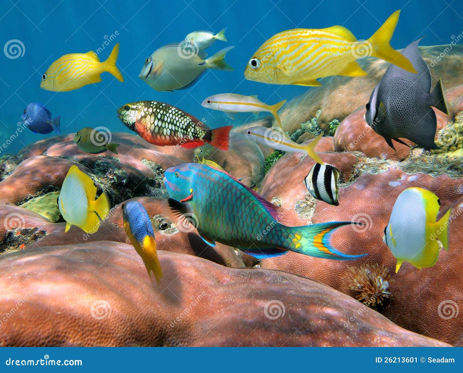 Banc des poissons au-dessus d un récif coralien