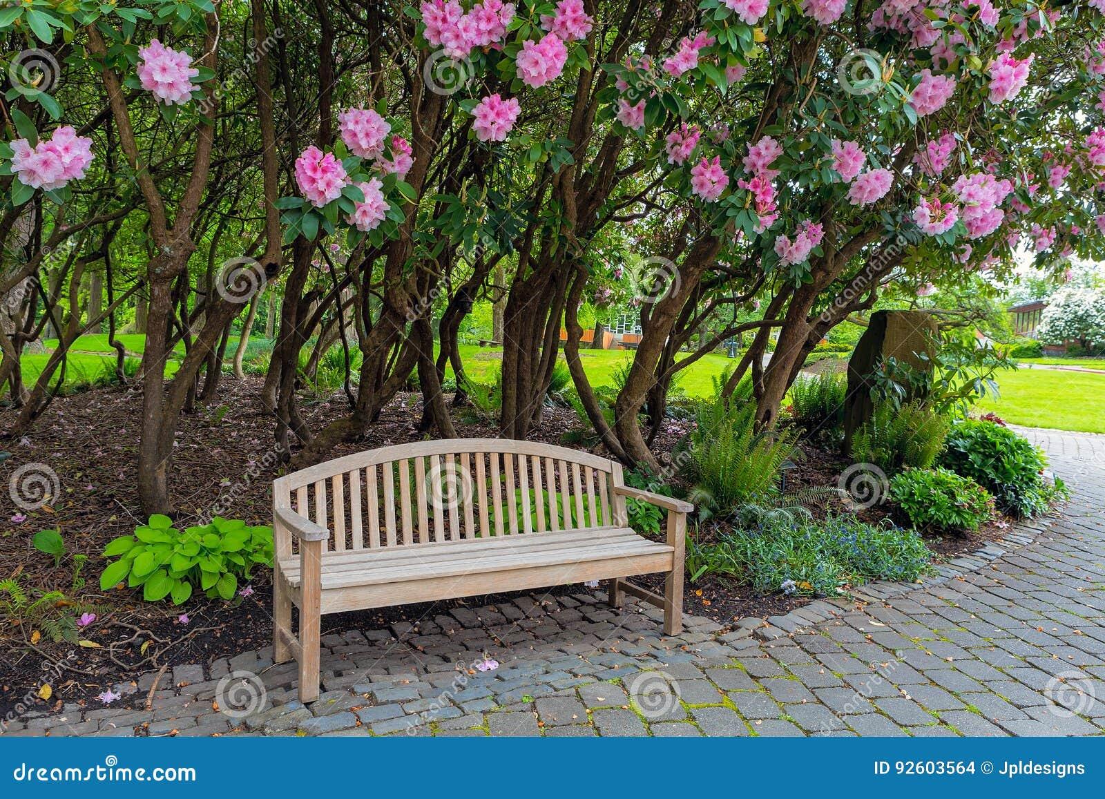 Banc en bois de jardin sous les arbustes de Rhododenron