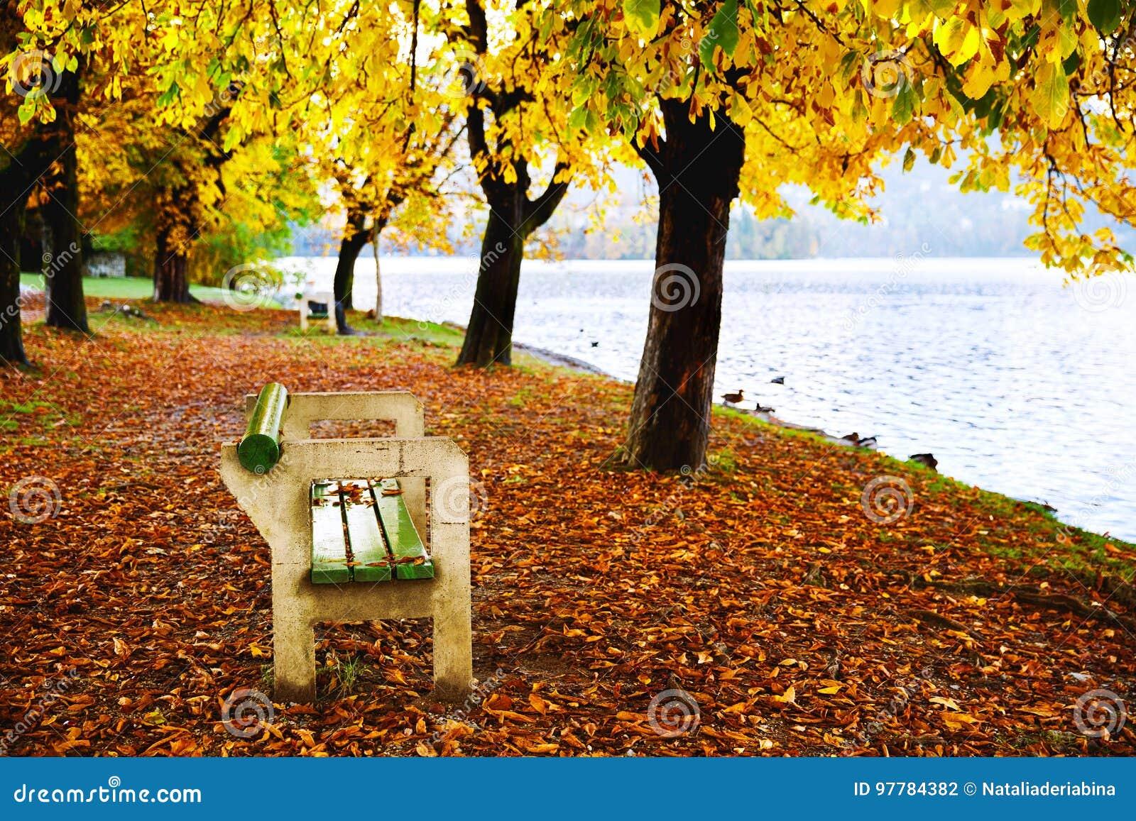 Banc en bois en nature sur le fond de la forêt et du lac d automne