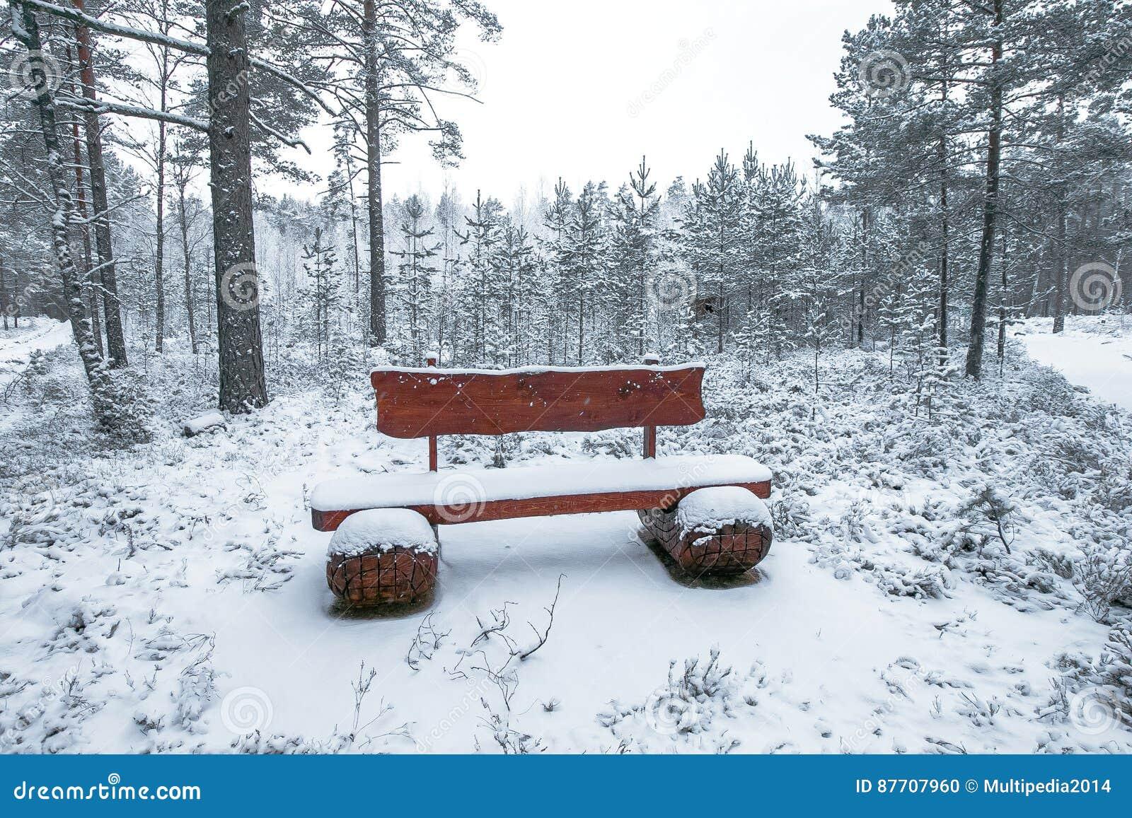Banc en bois en parc d hiver