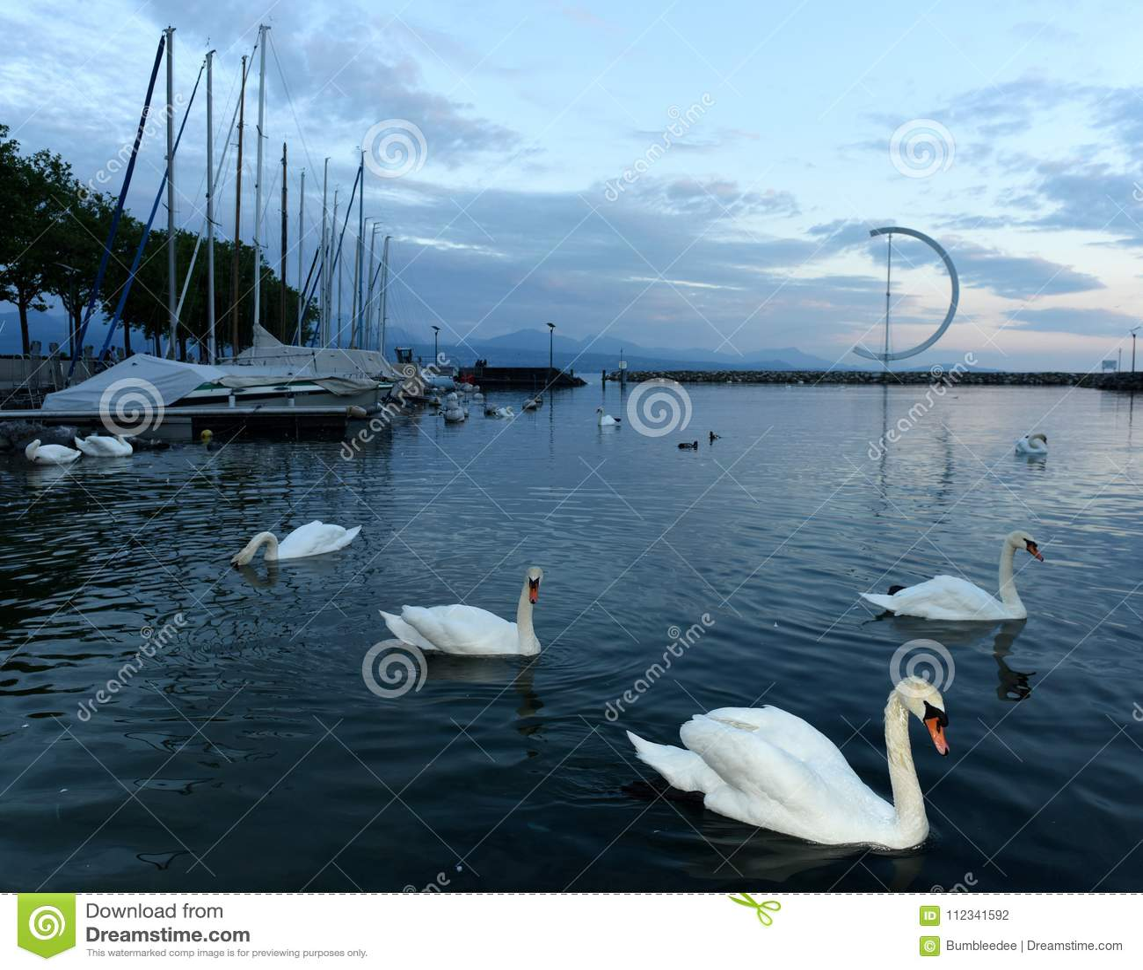 Banchina di Losanna del lago geneva con i cigni e l yacht, Svizzera