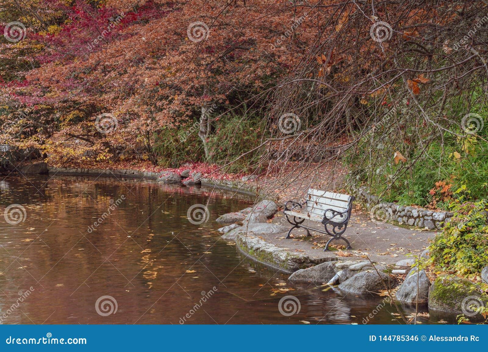 Banco al parco Lithia dal lago