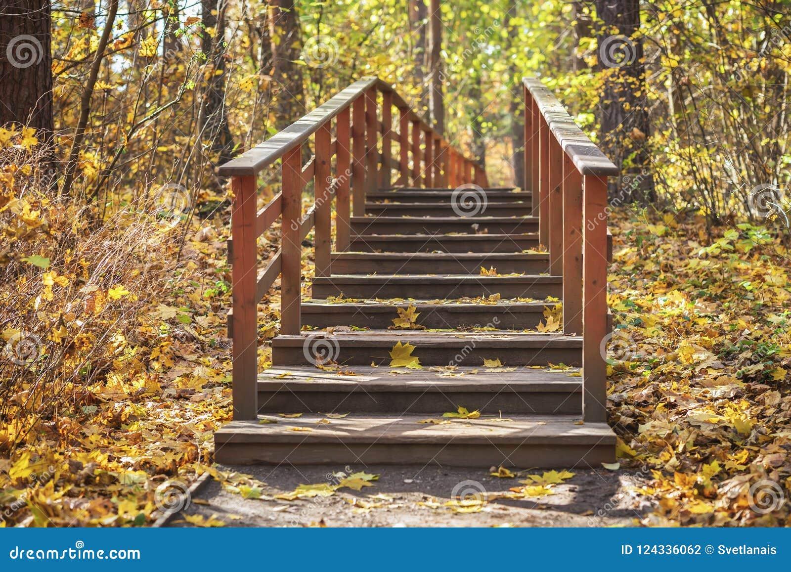 Banco de madeira velho só no parque vazio do outono sob as folhas, estações da floresta da queda, conceito nostálgico do humor