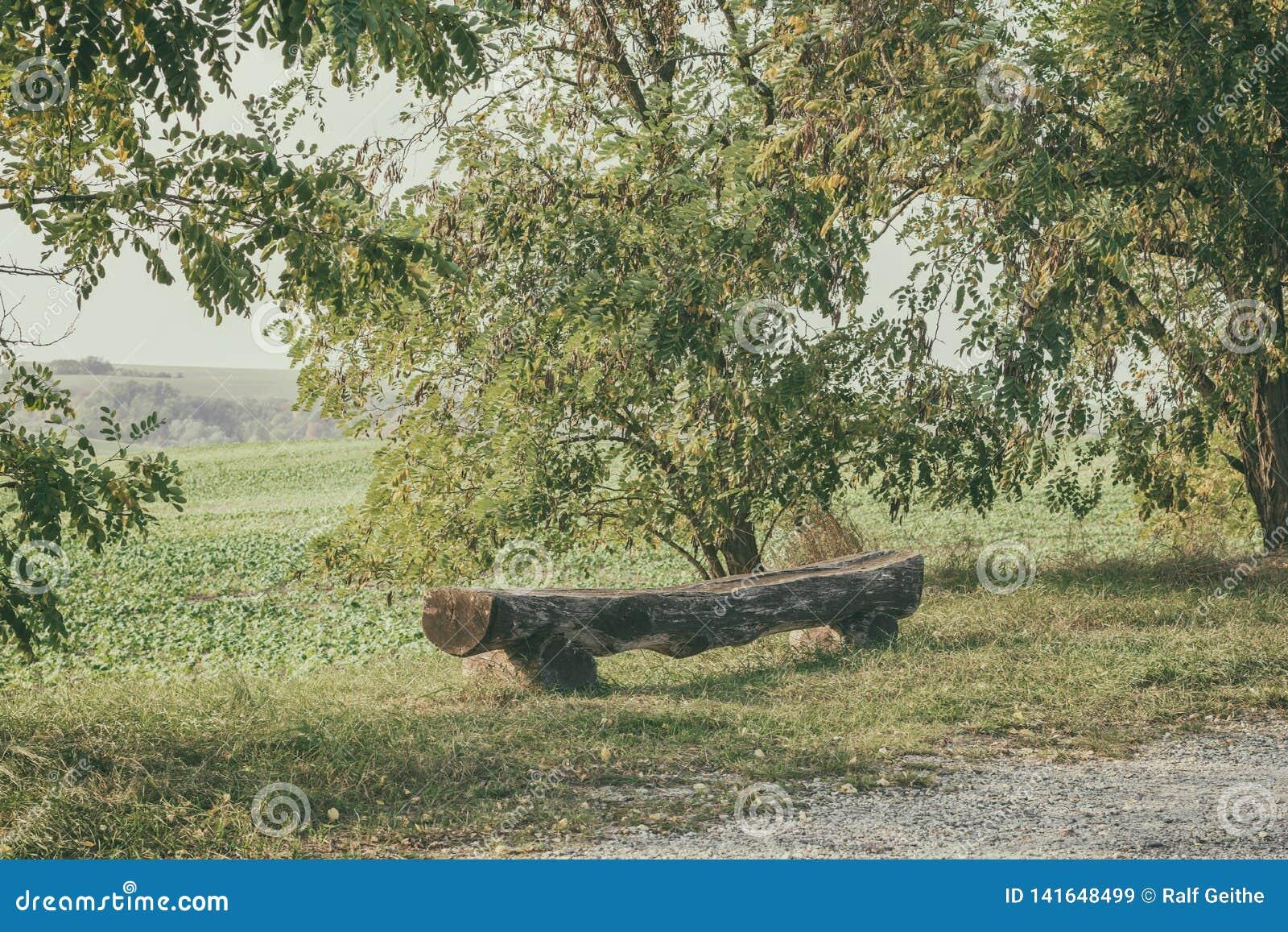 Banco de madera resistido viejo entre los árboles en una región rural natural