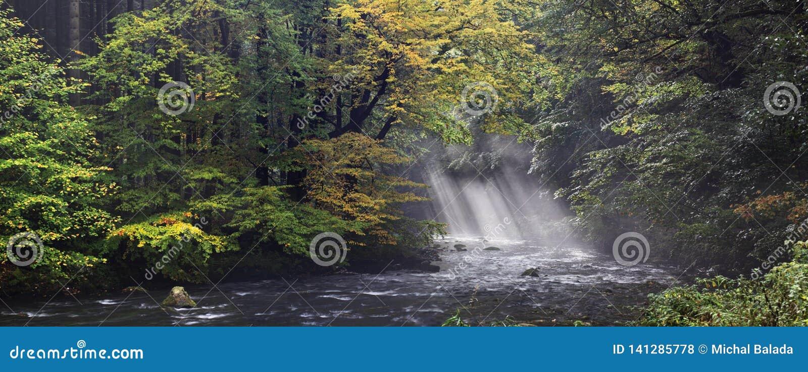 Banco de rio do outono ou do verão com folhas da faia O verde fresco sae em ramos à superfície da àgua faz a reflexão Noite chuvo