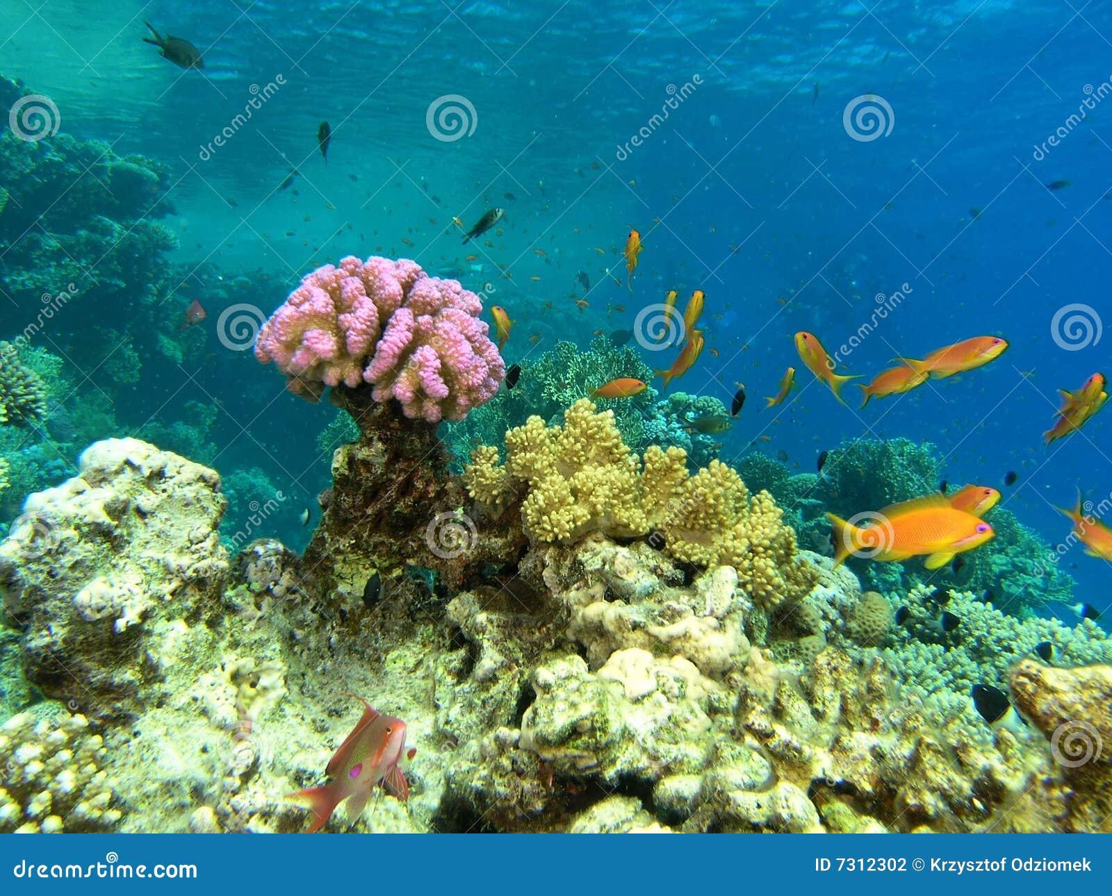 Banco dei pesci sulla scogliera