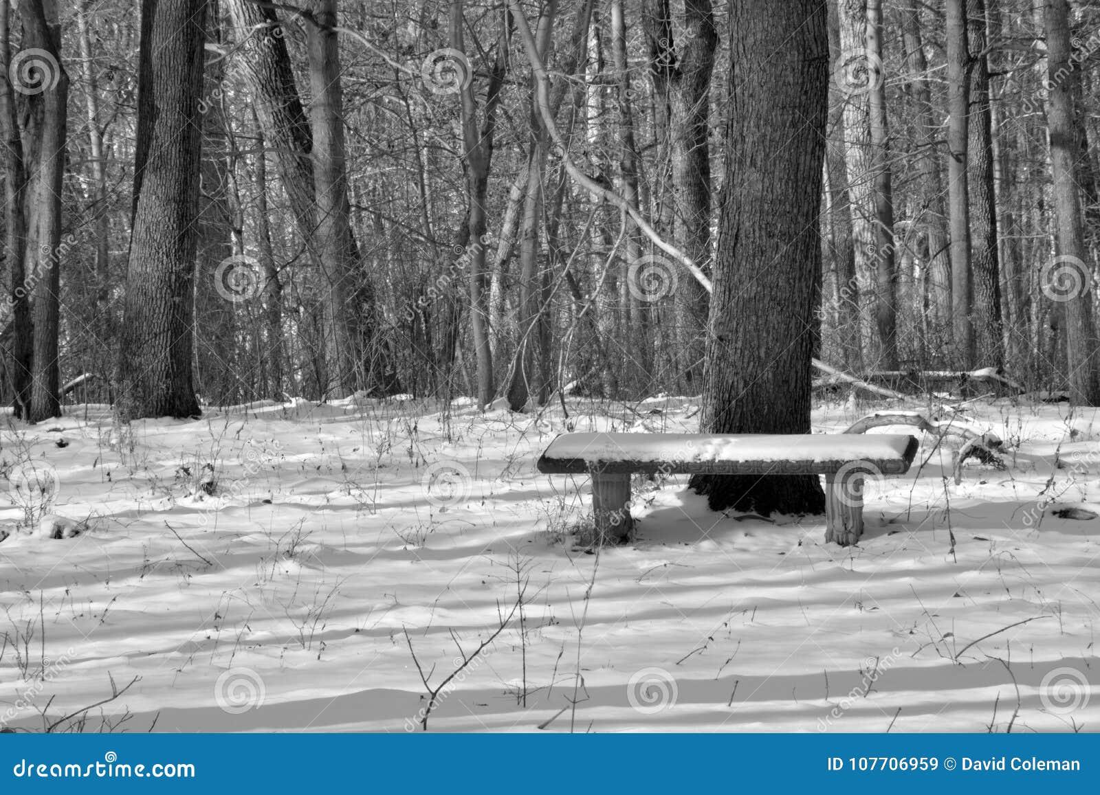 Banco innevato nella foresta